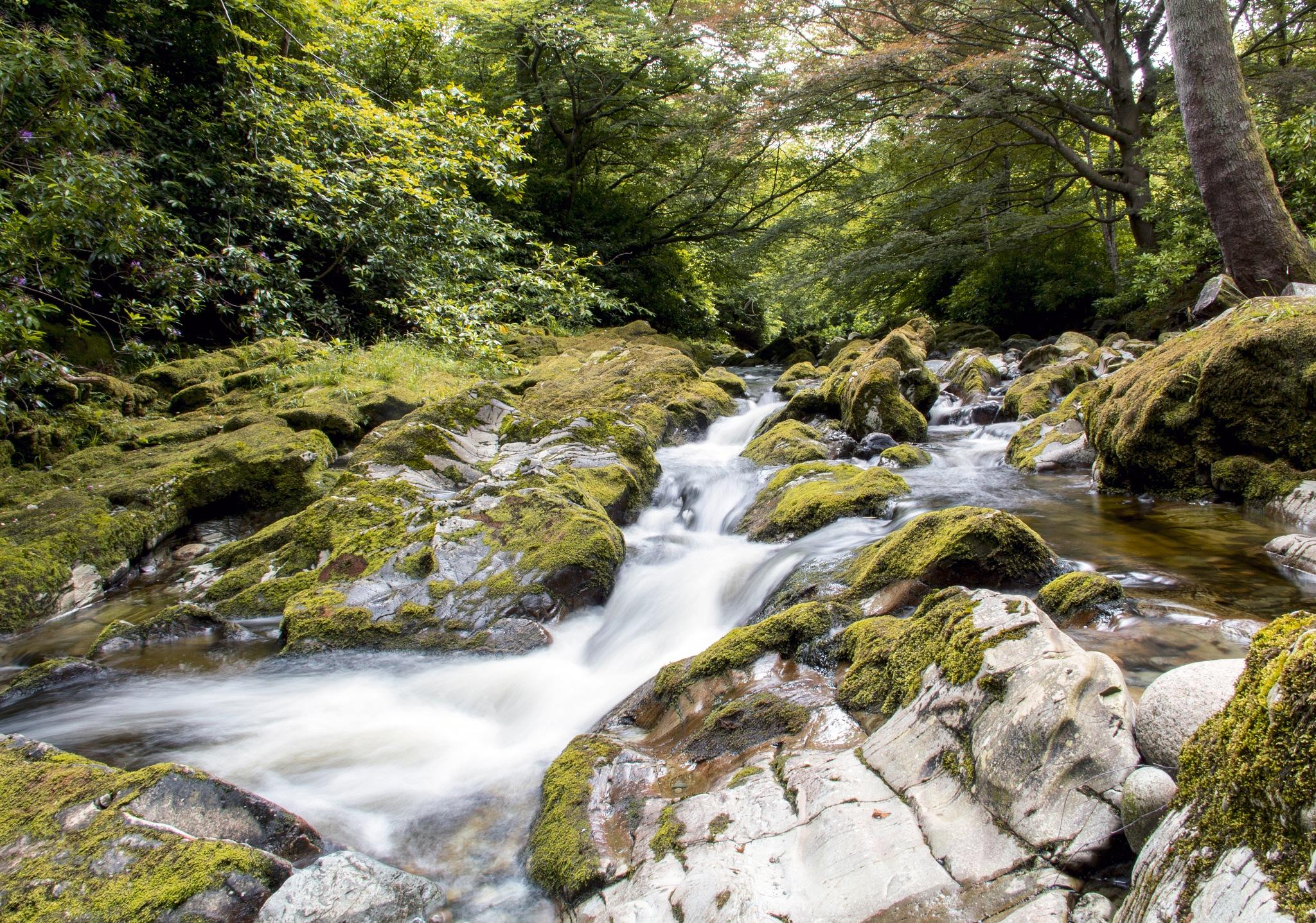 Forest Stream by DerekHughes
