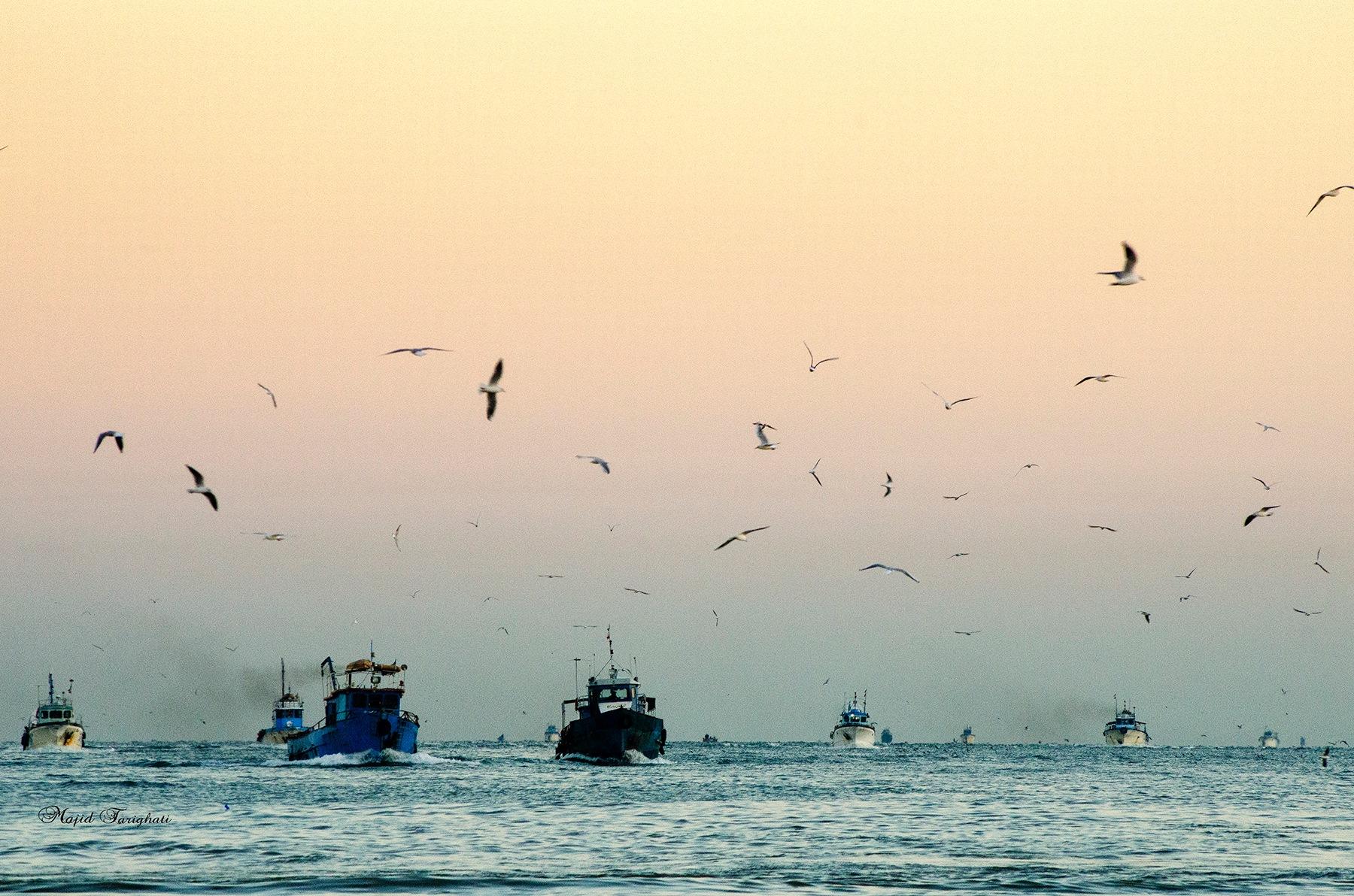 Fishing boat . Babolsar by Majid Tarighati