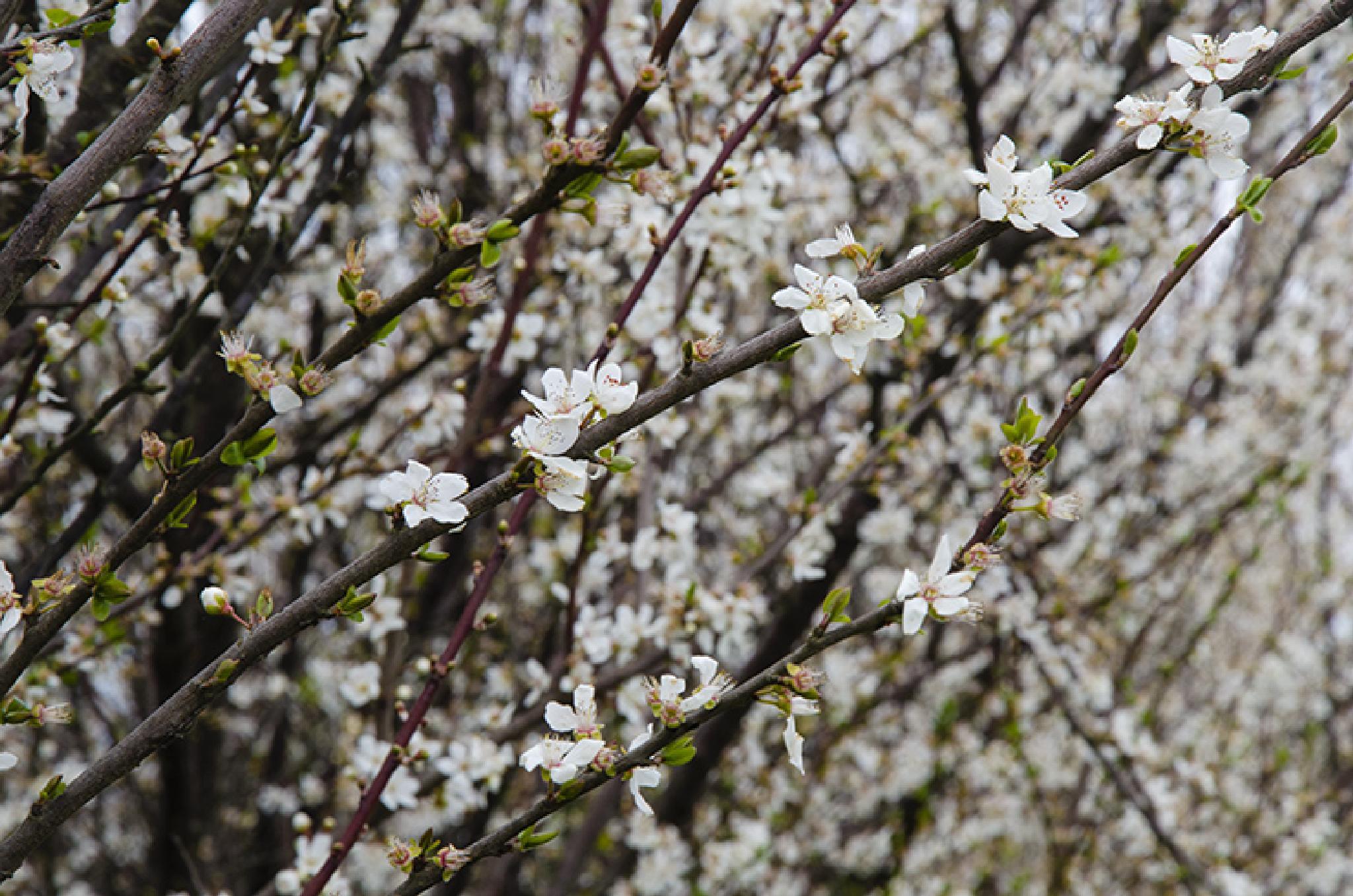 Spring by Majid Tarighati