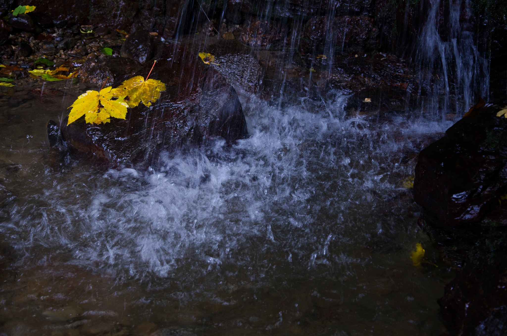 Autumn by Majid Tarighati
