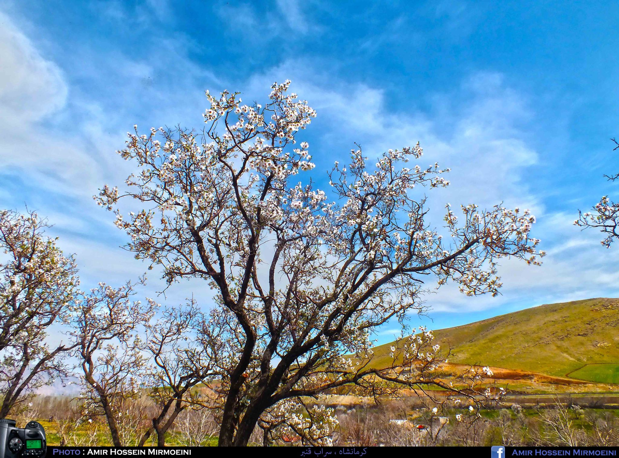 sarab-e Ghanbar - Kermanshah - Iran by Amir Hossein