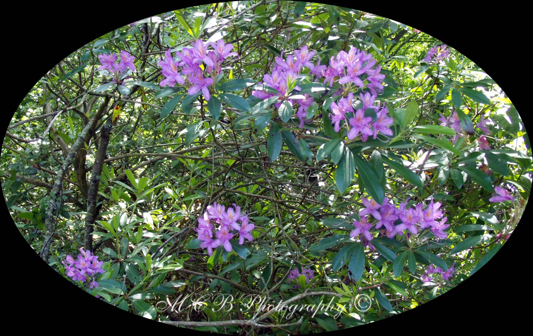purple flowers by michelle