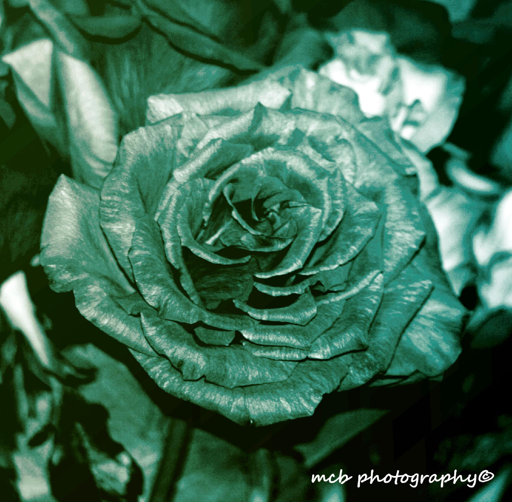 vintage rose by michelle