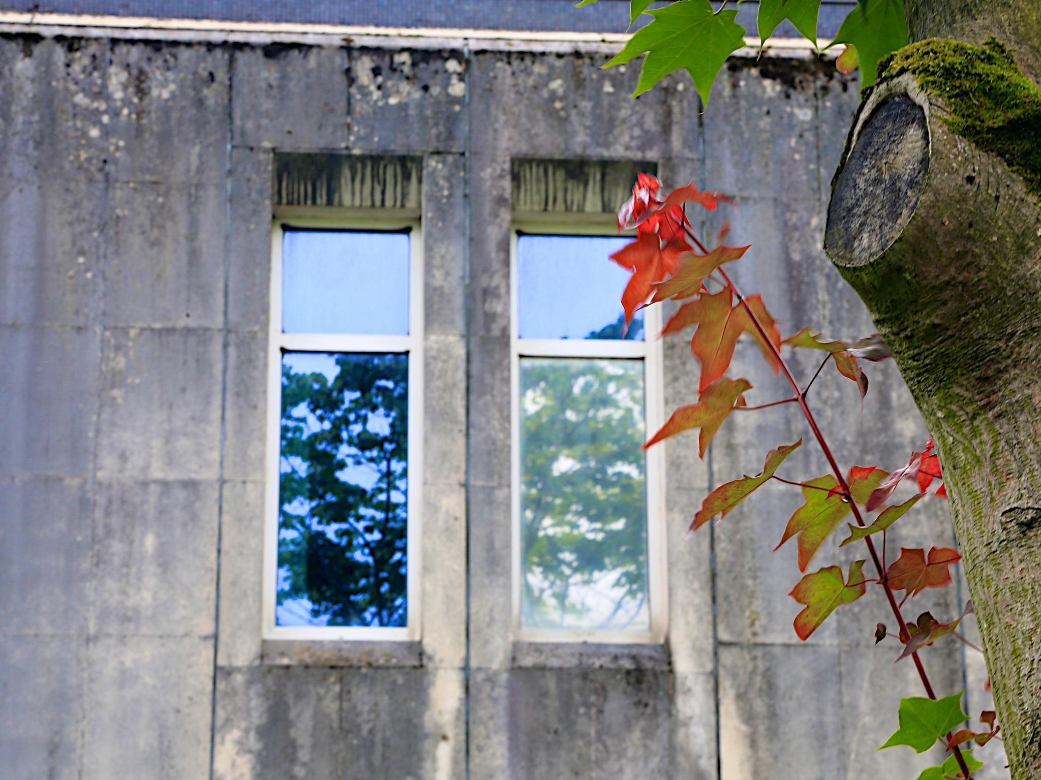 Leaves by Ellisroger