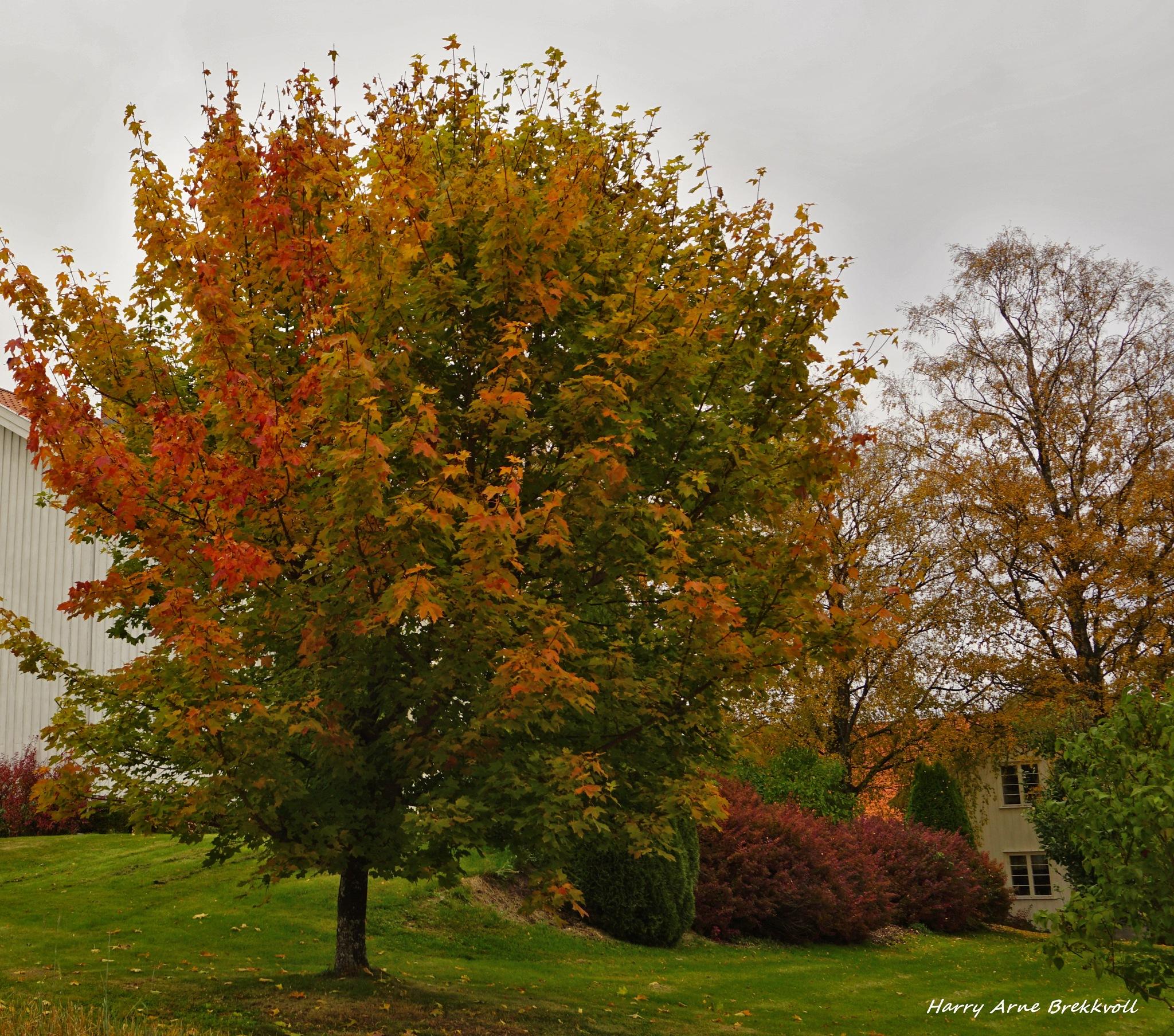 Autumn by Phero