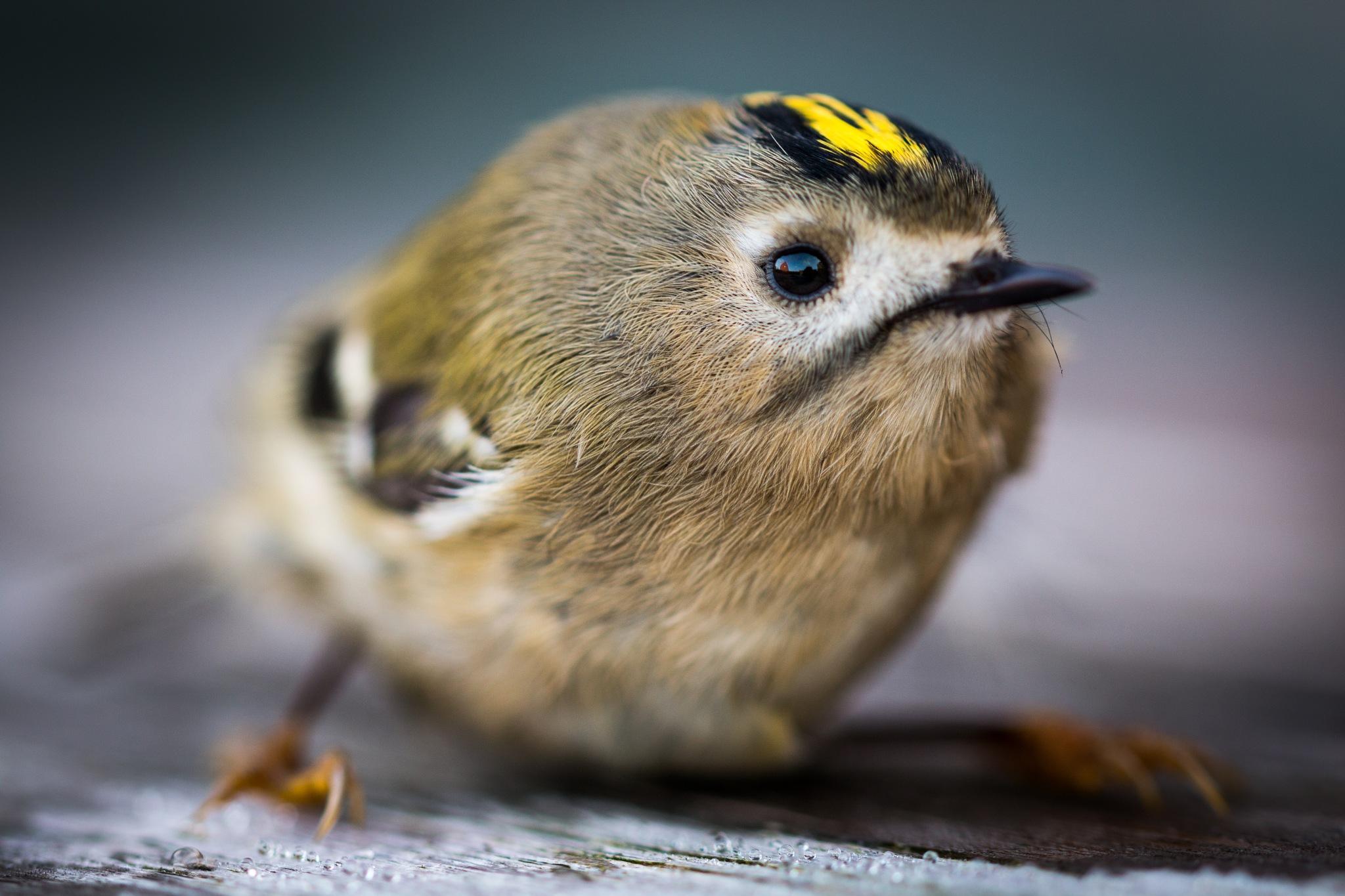 Birdy by Benoit Vandenkieboom