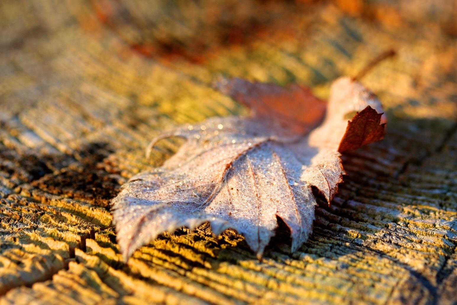 Leaf by Ingstina