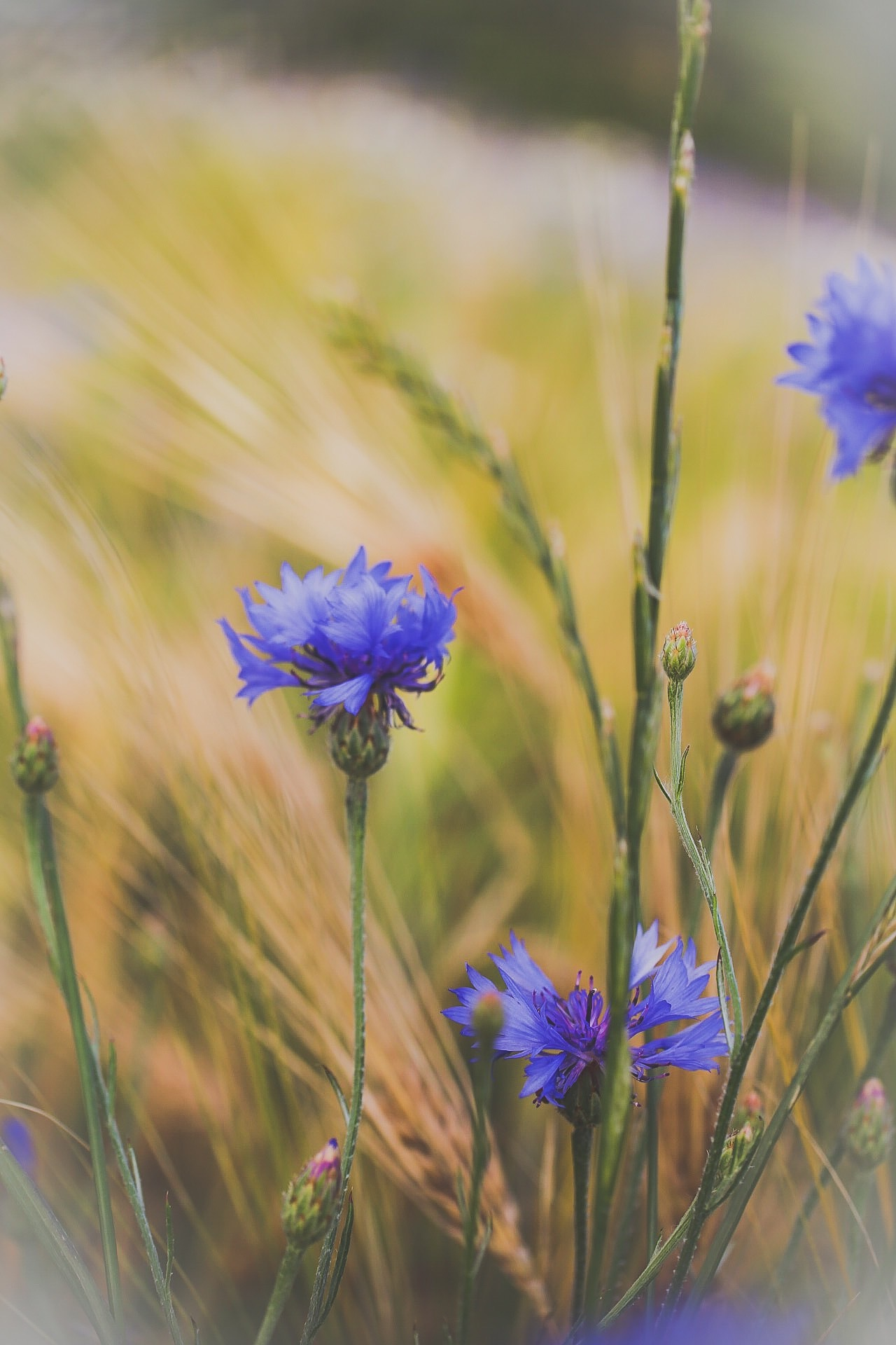 Flowers  by Ingstina