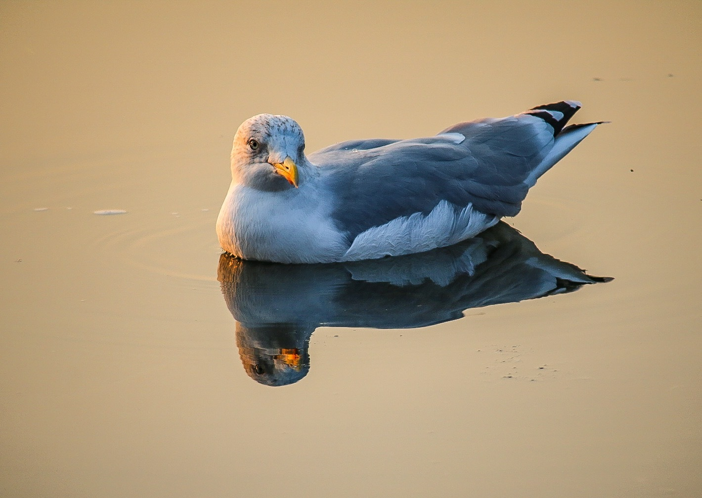 Gull by Ingstina