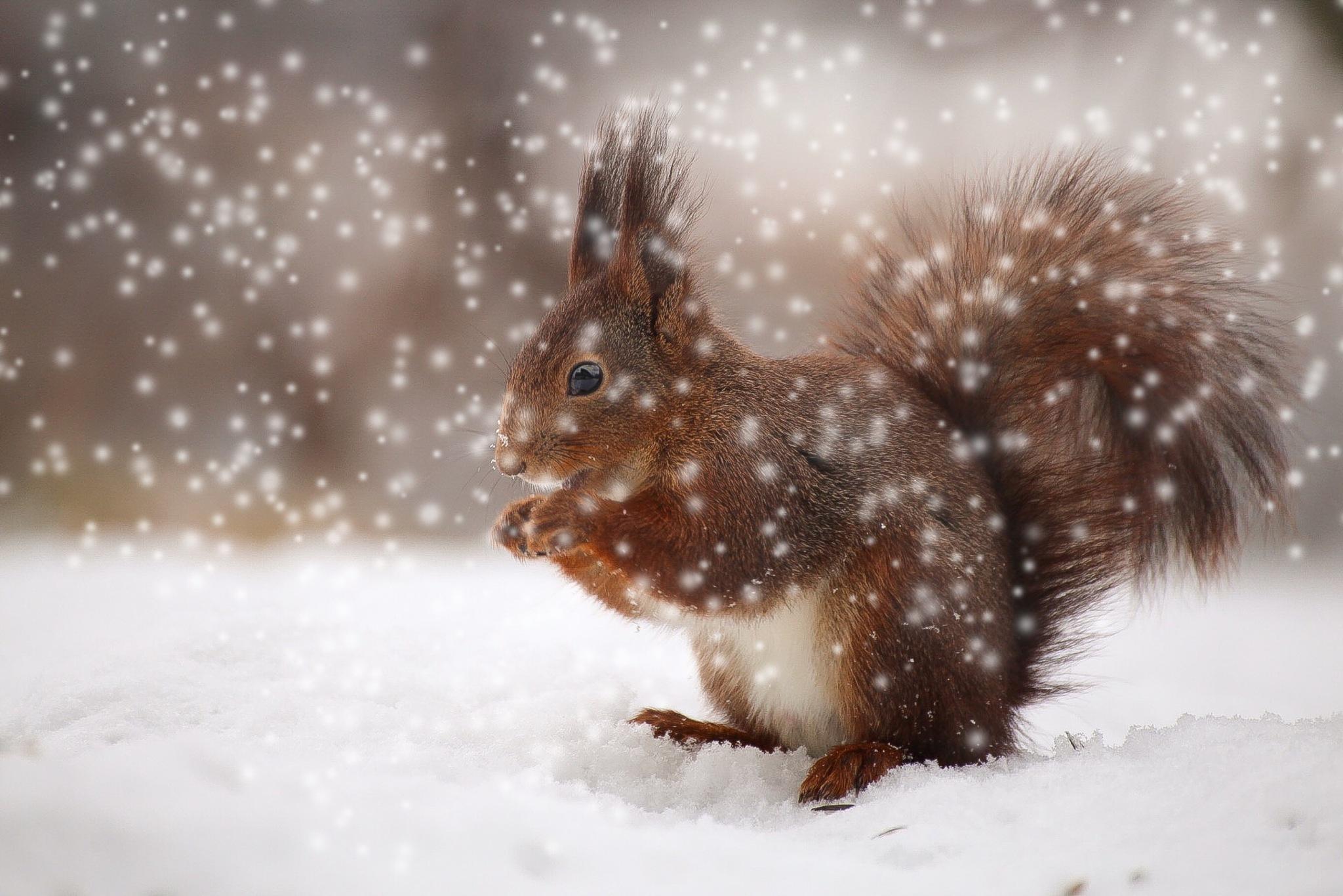 PicsArt squirrel  by Ingstina