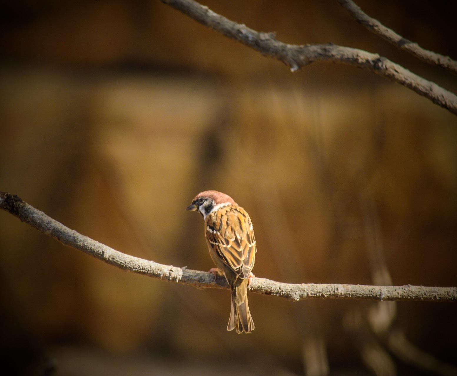 Little Bird  by Ingstina