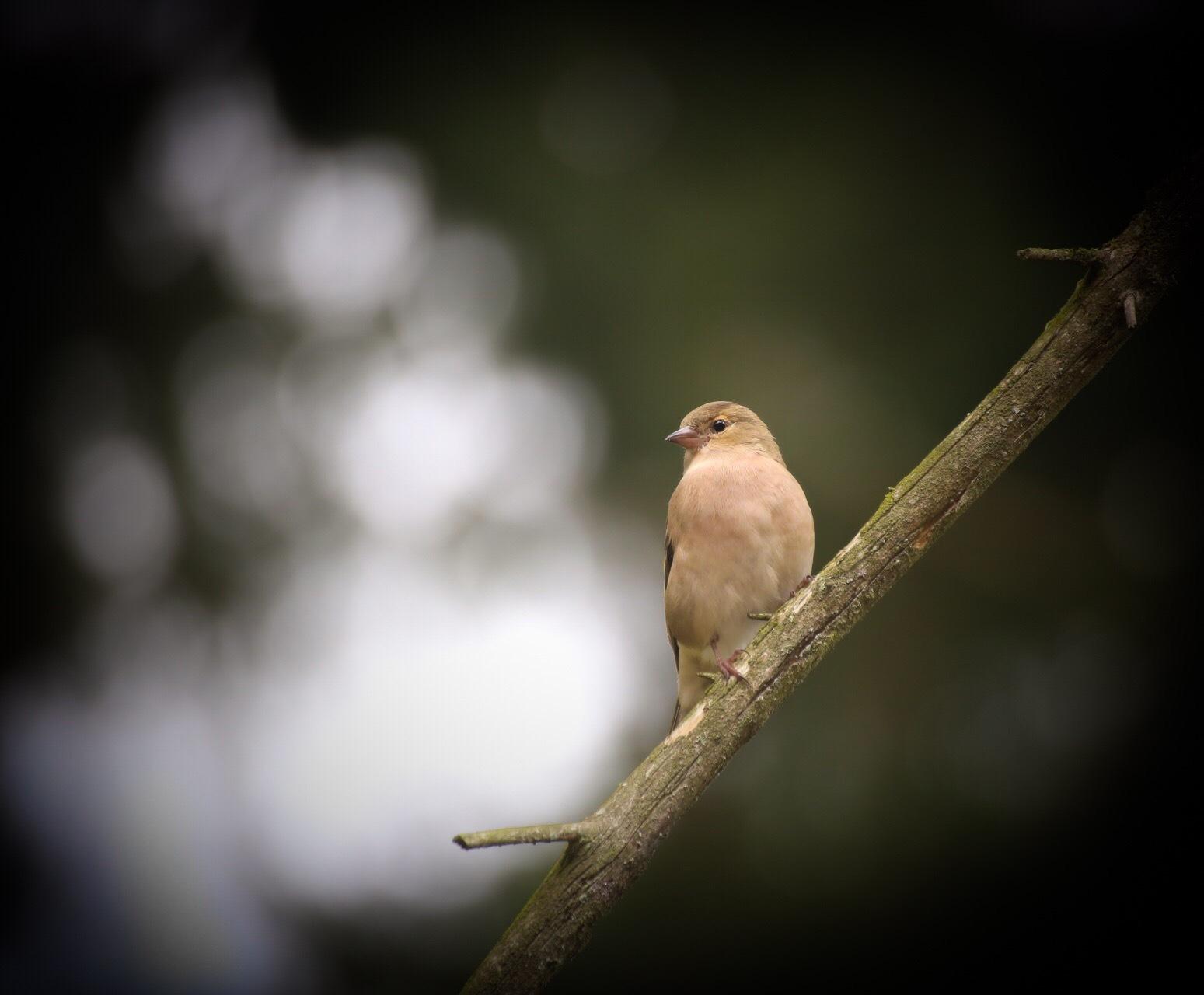 Small bird  by Ingstina