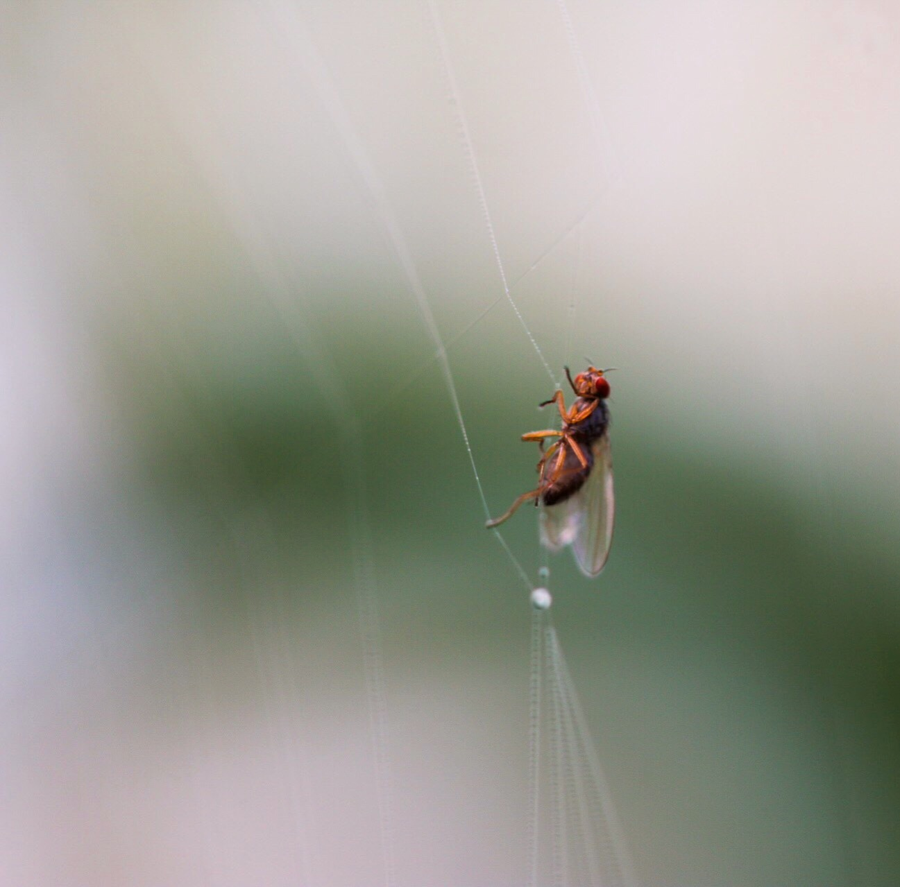 Insect by Ingstina