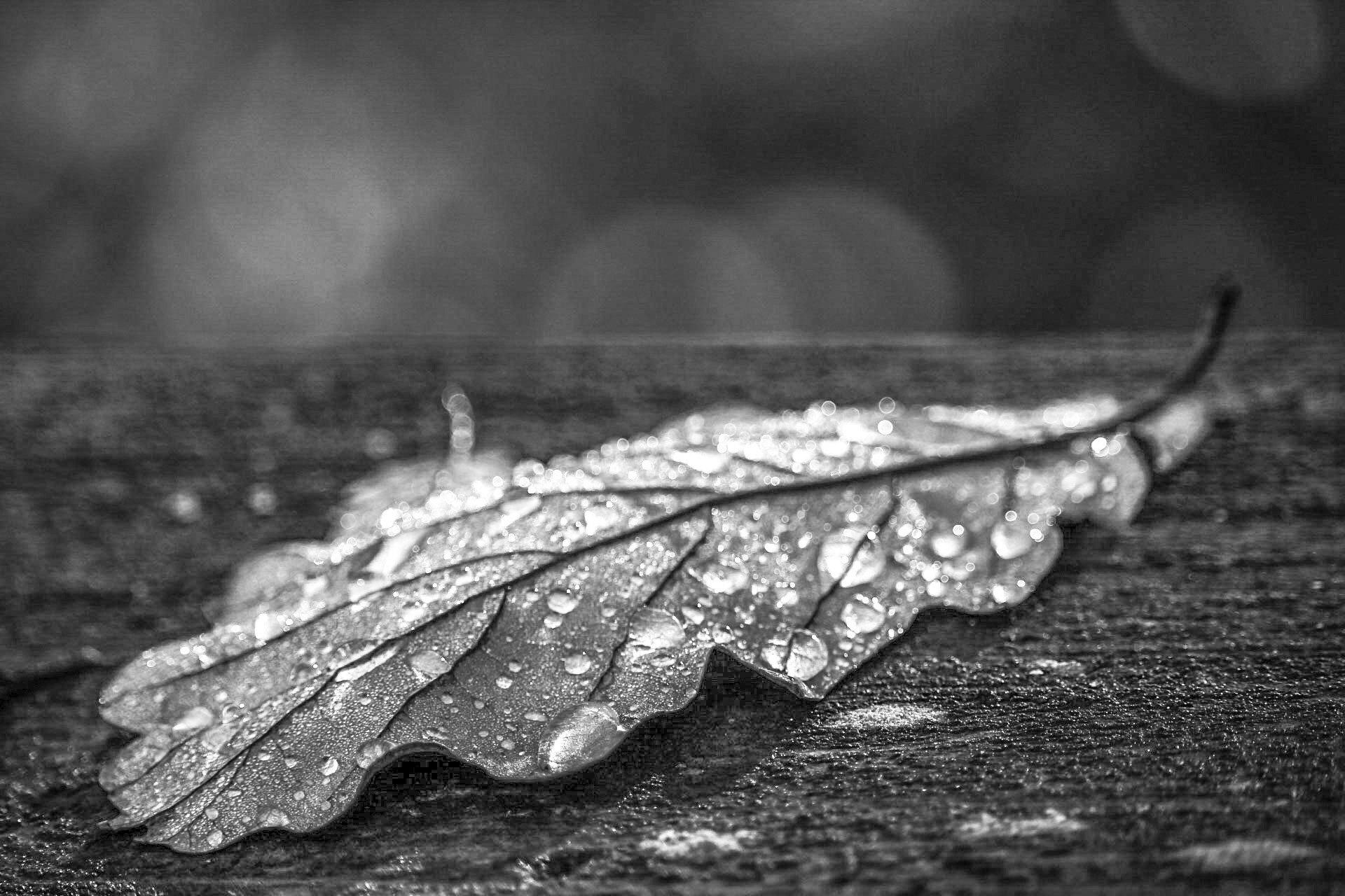 Leaf black and white  by Ingstina