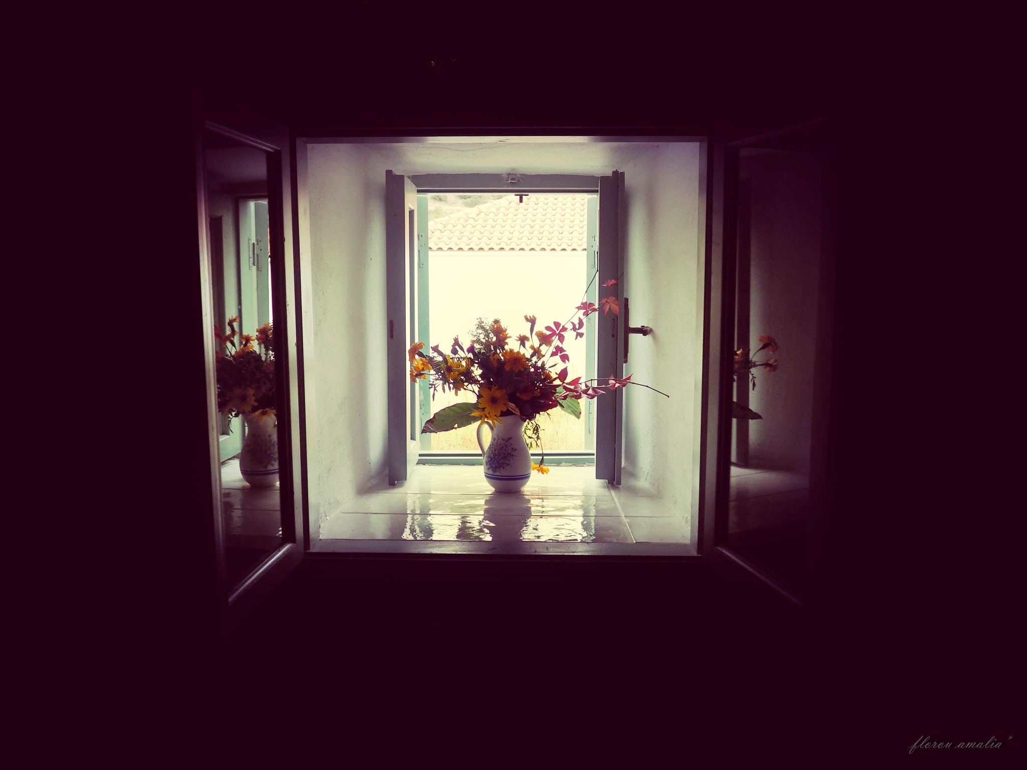 morning glory by Florou Amalia