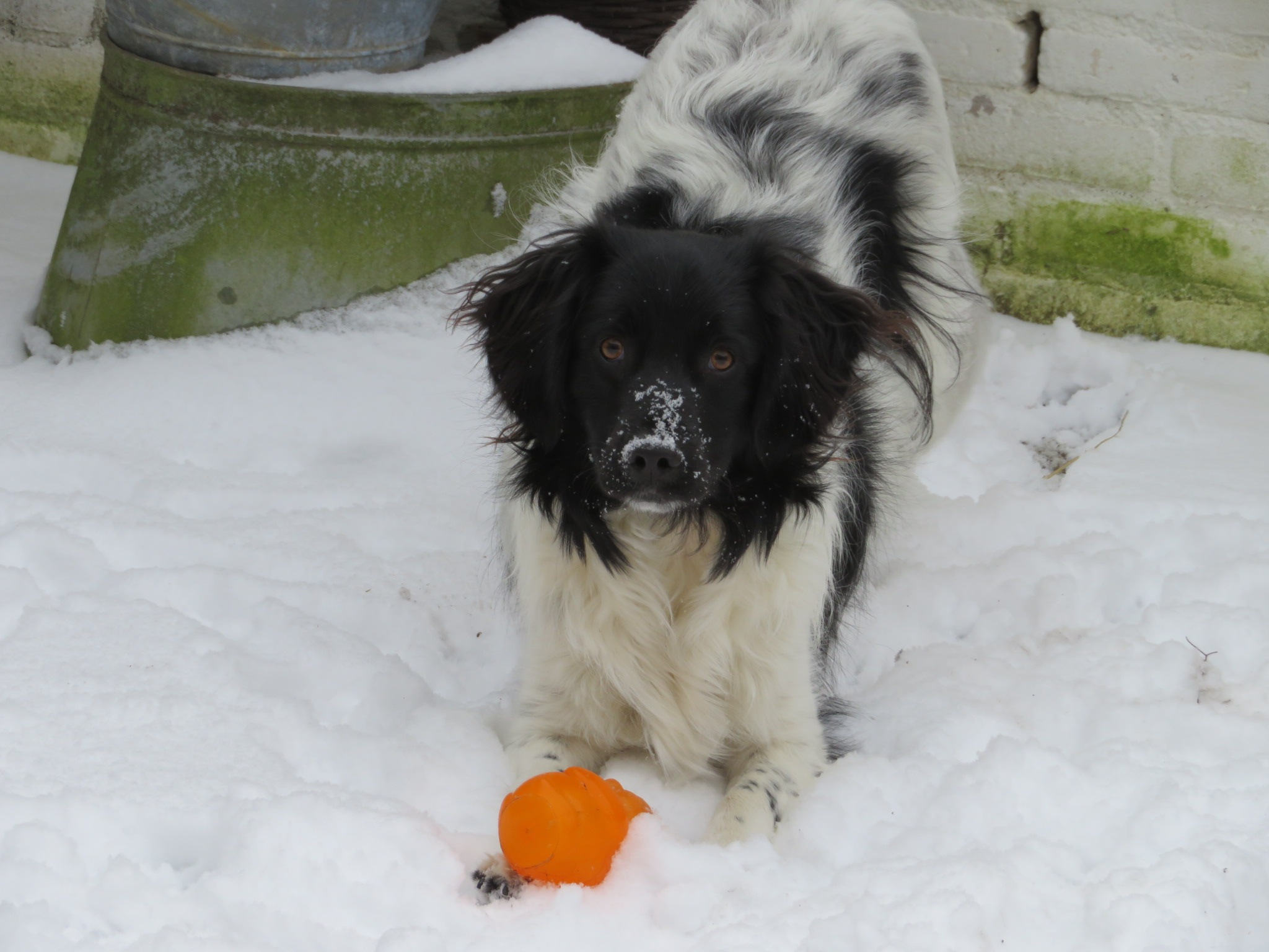 snow dog by anneke