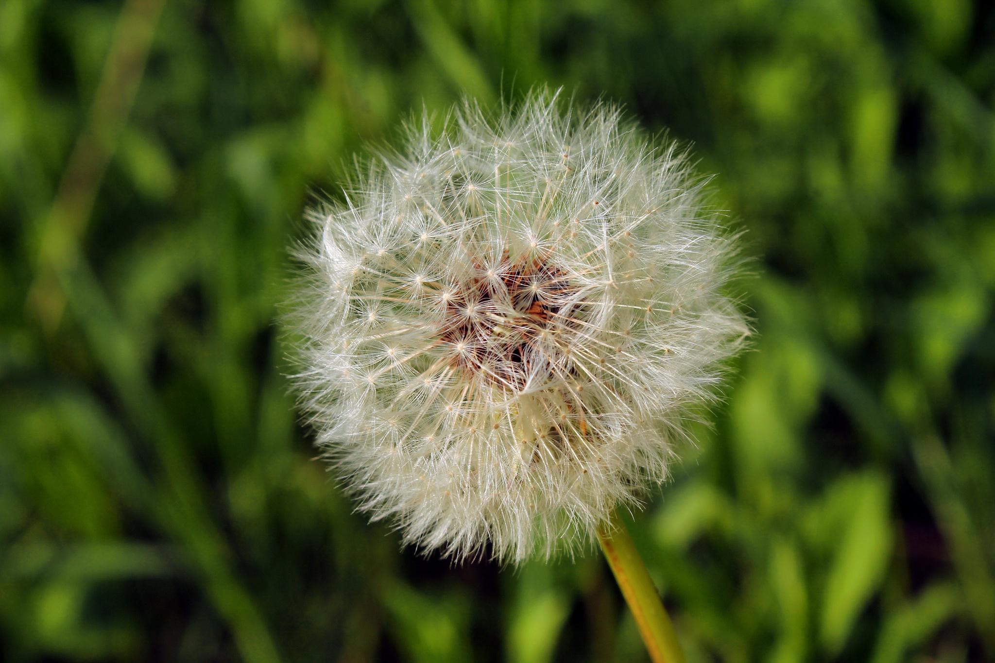 Allergy season by mickie gordon