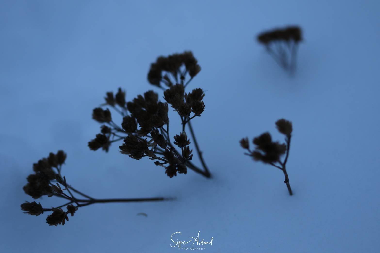 Untitled by siggi
