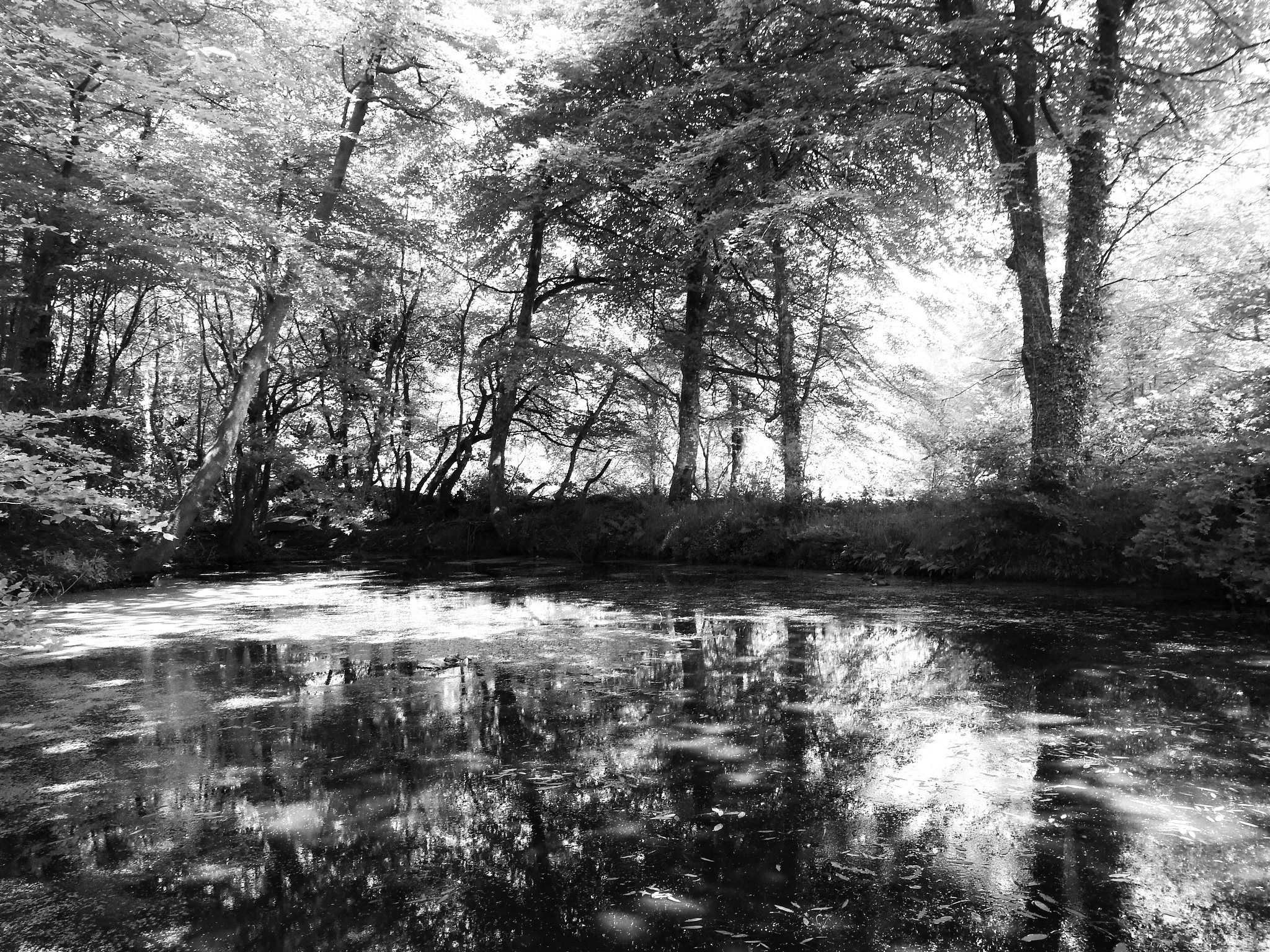 Photo in Landscape #lake #landscape #devon #woodland #trees