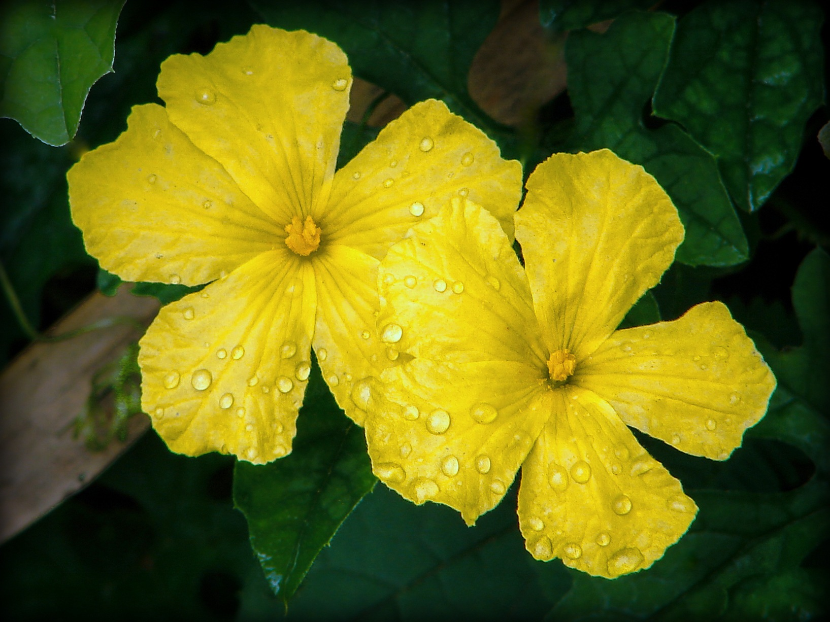 Simple Thai Blooms after a morning rain..... by Greg Towle
