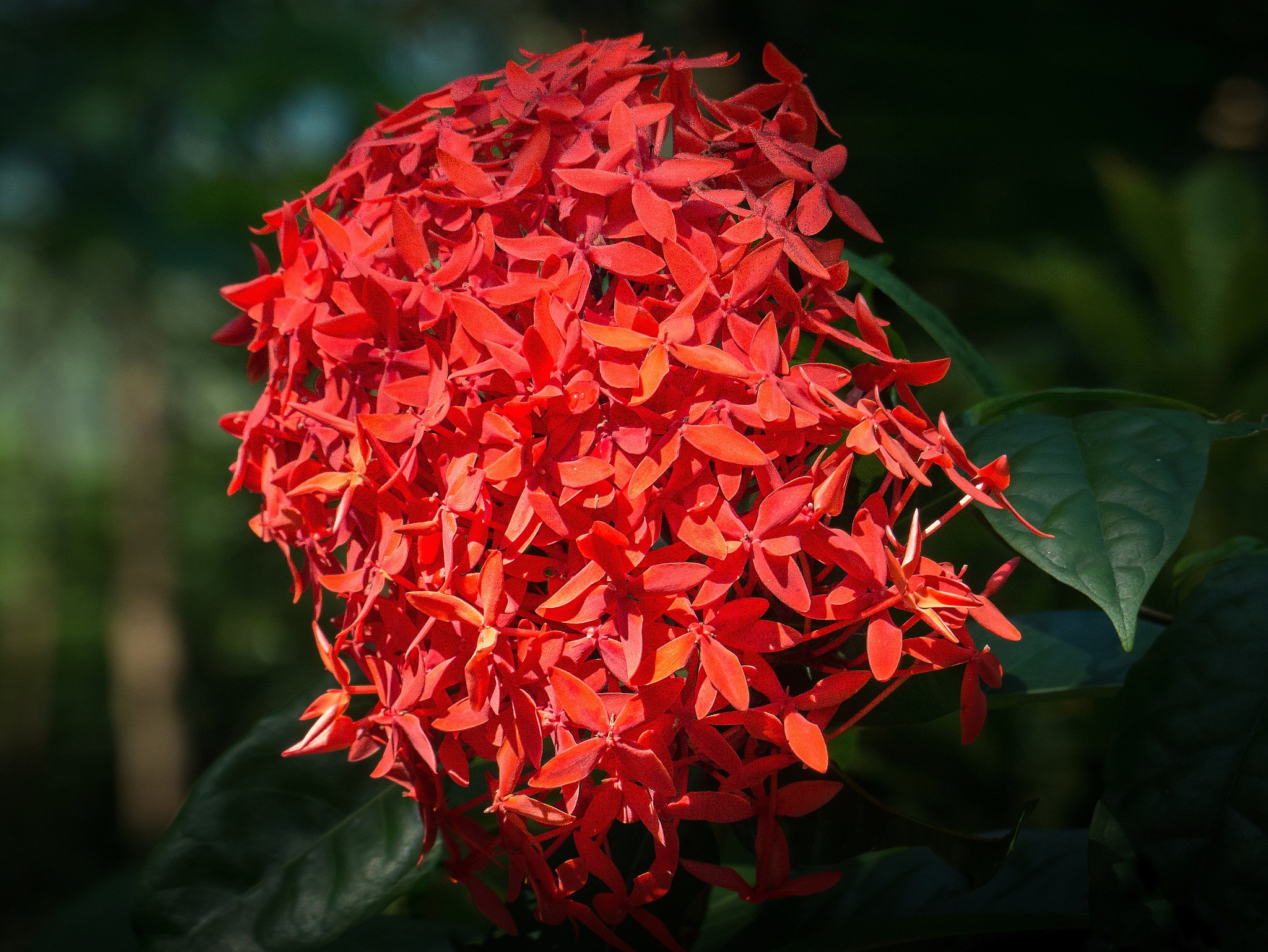 Large group of red blooms... by Greg Towle