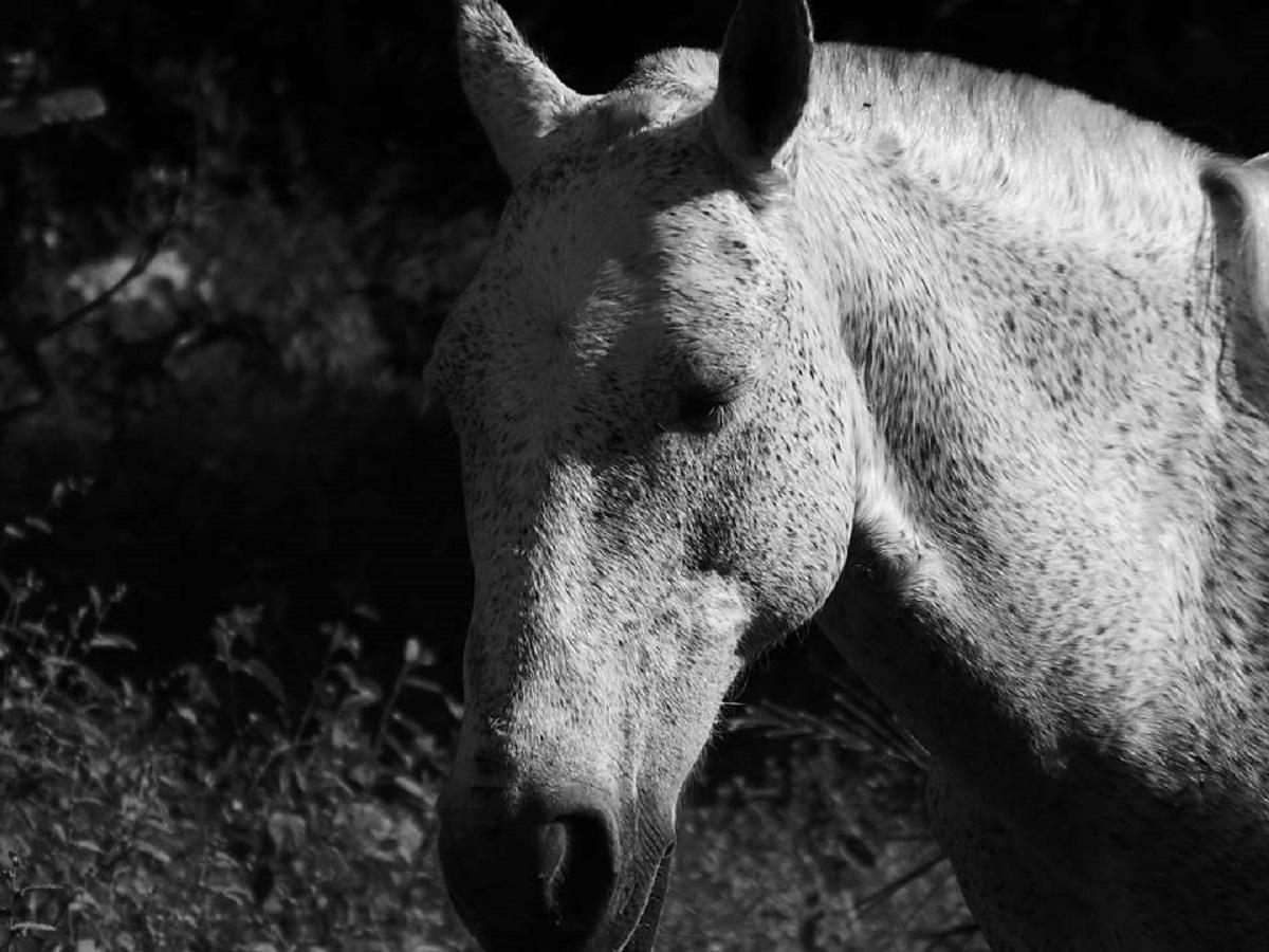 Cavalo comum. by renneefontenele