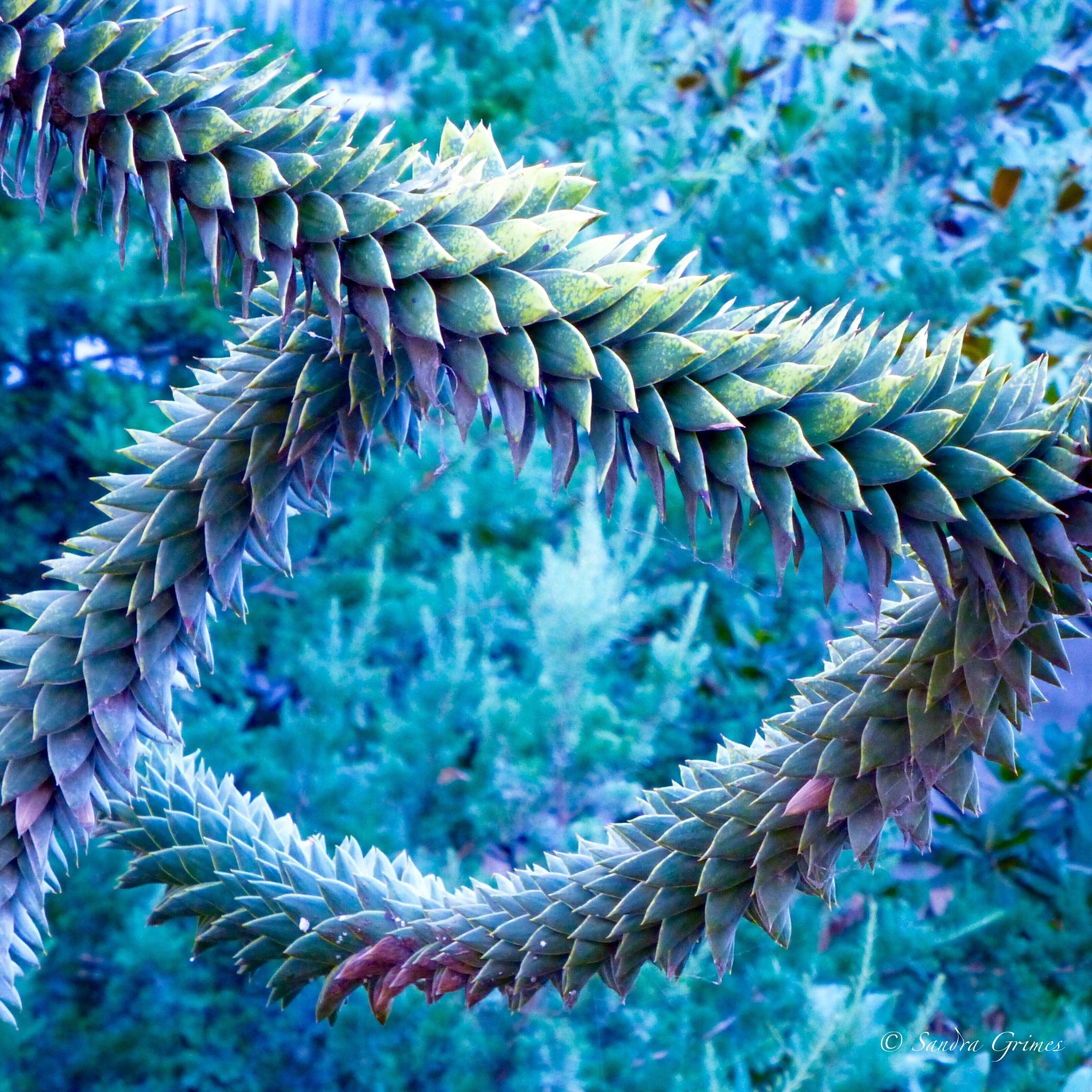 Dragon Succulent by TrixieGirl5192