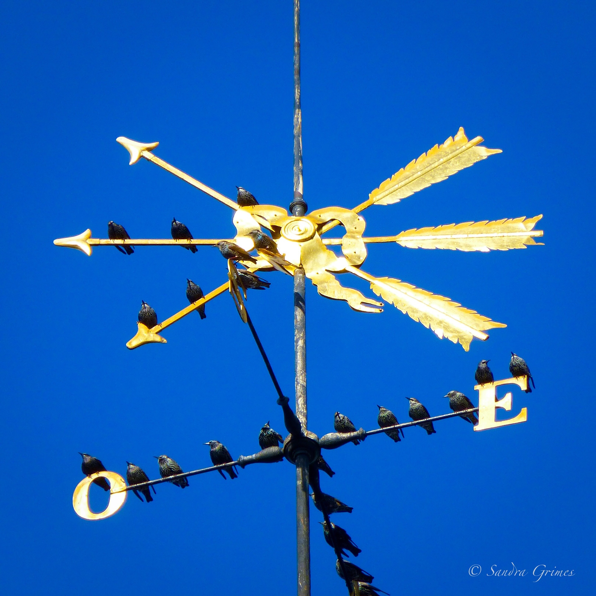 Weather Vane with Visitors by TrixieGirl5192