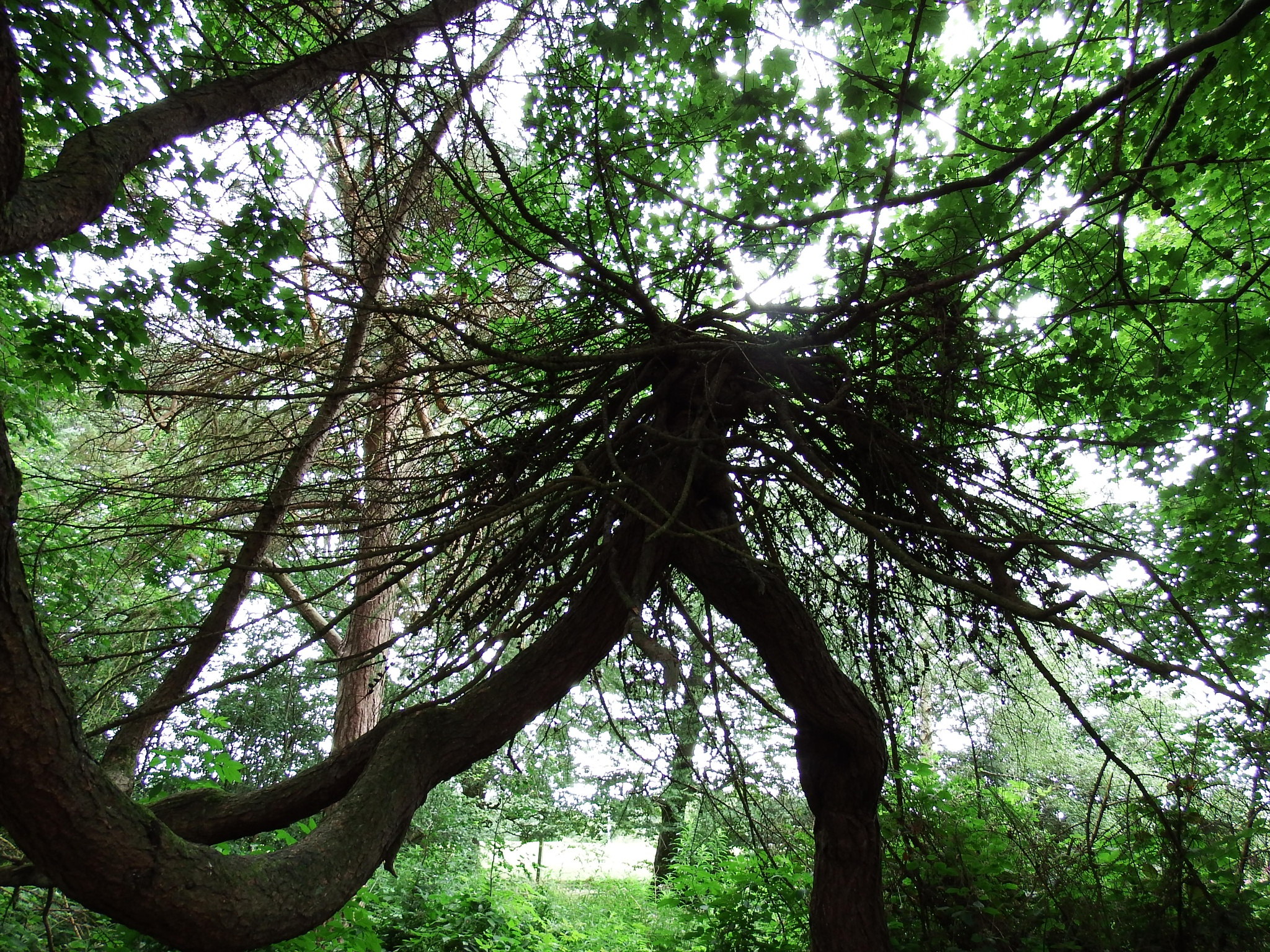 weirdest shaped tree  by seannel