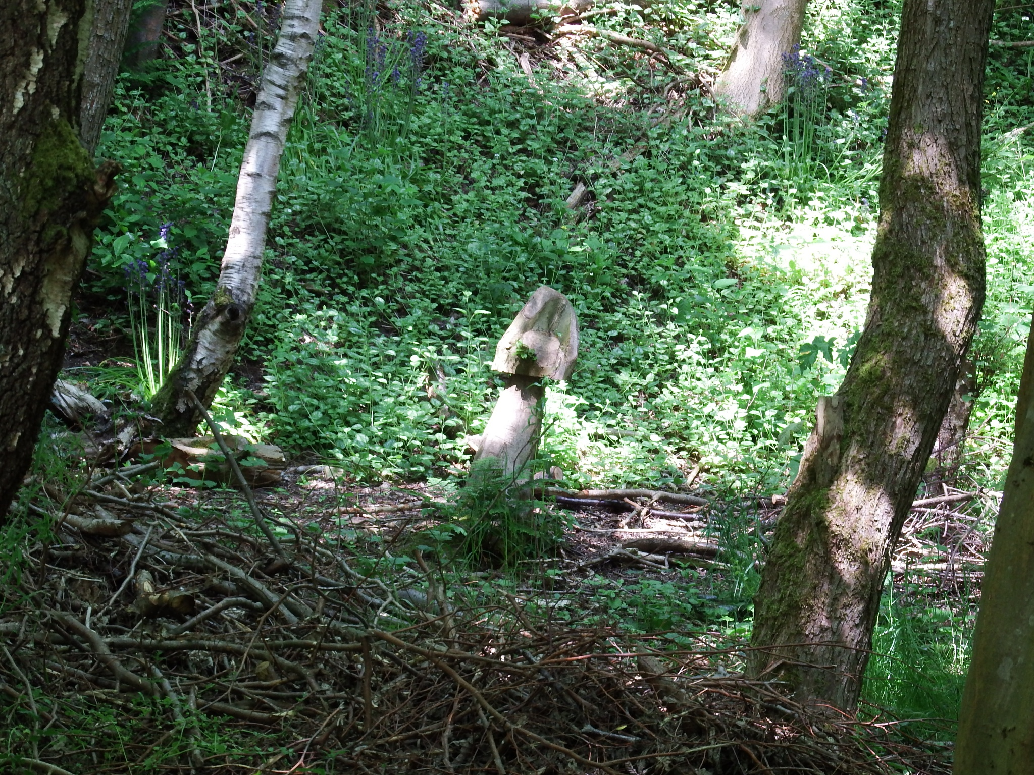tree felling with a sense of humour  by seannel