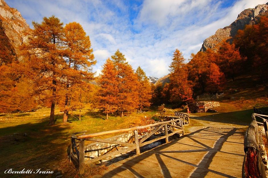 Trees in fall by BendottiIvano