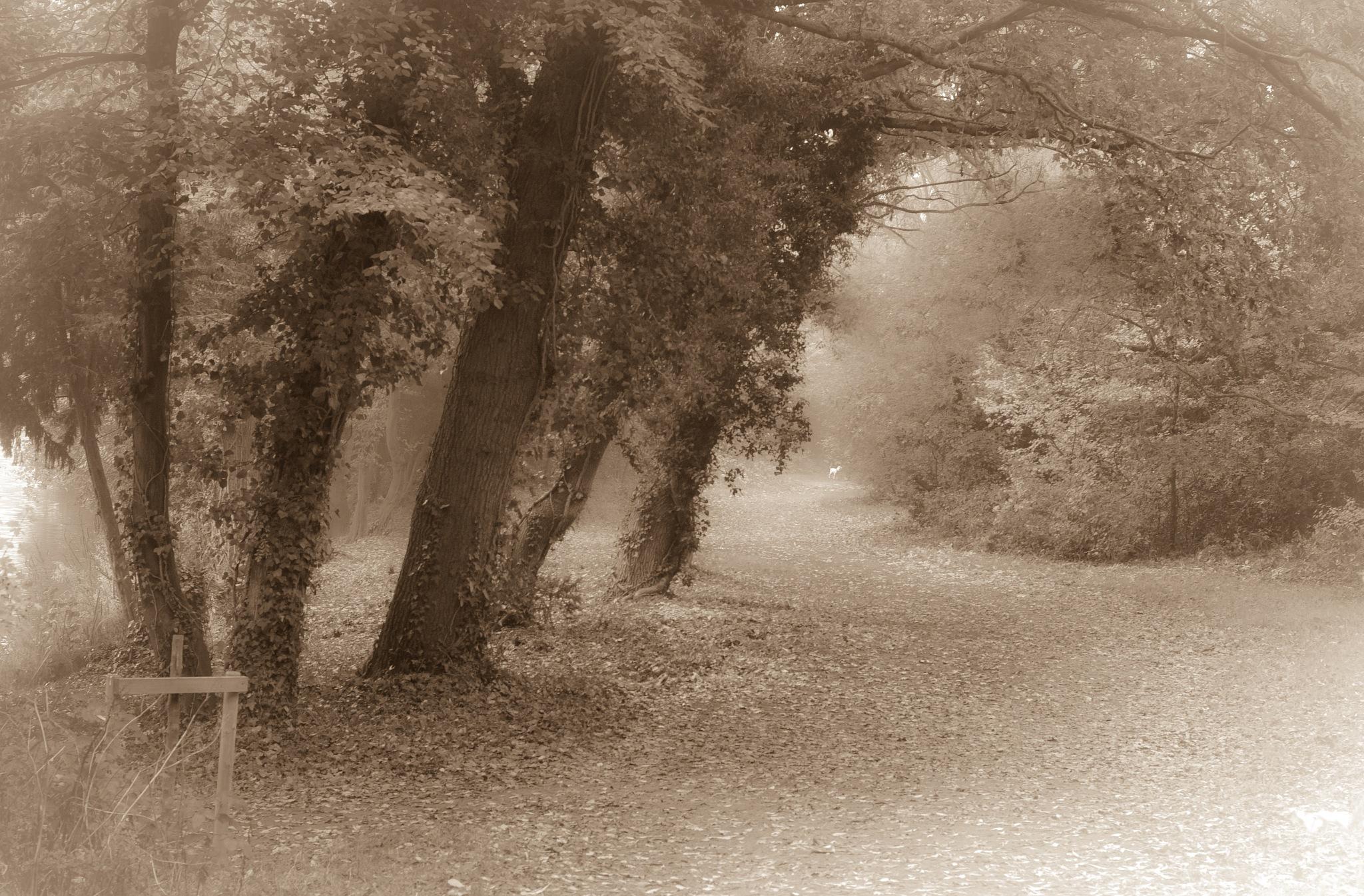 Autumn Mist by Bev Laws