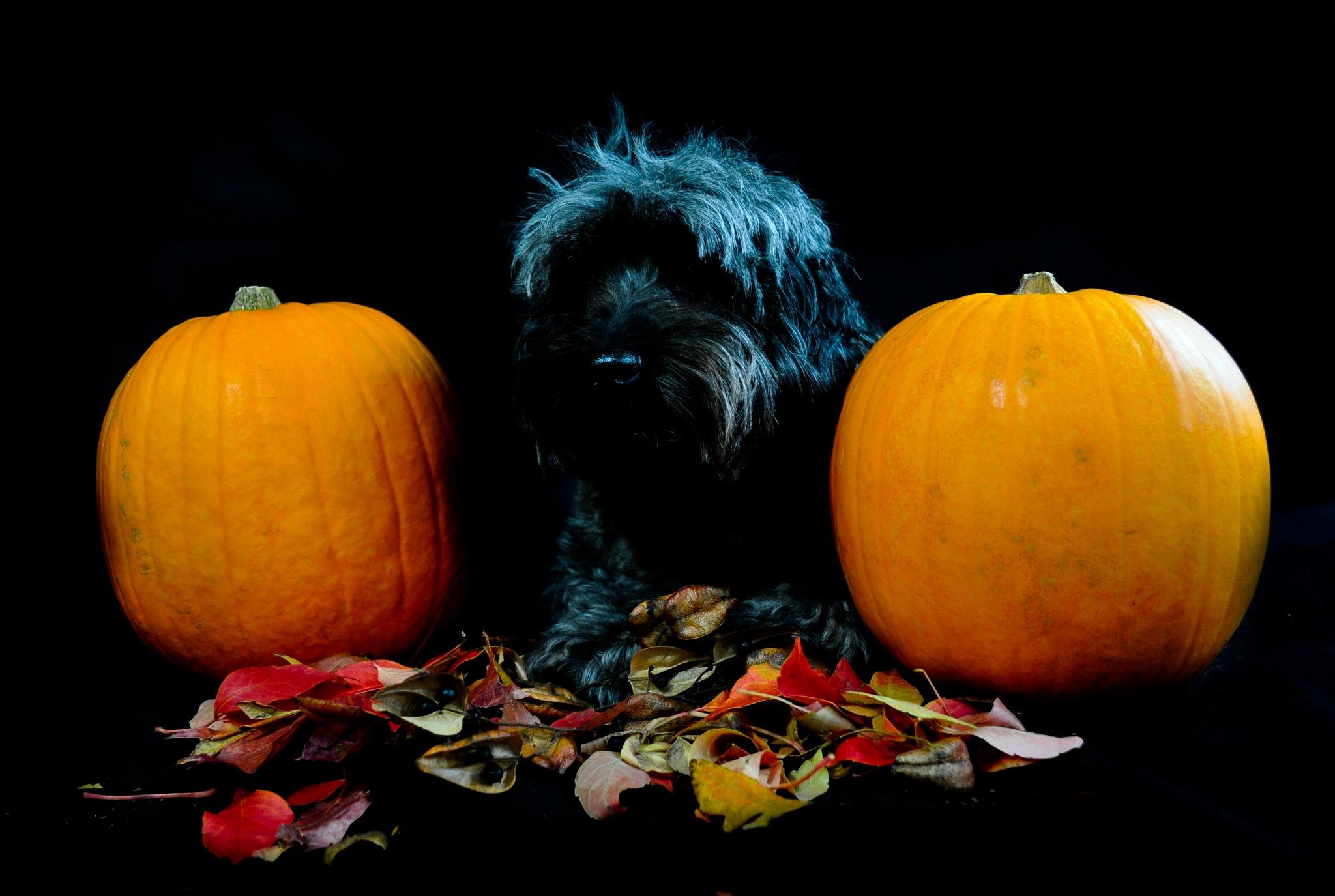 My Little Pumpkin #2 by Bev Laws