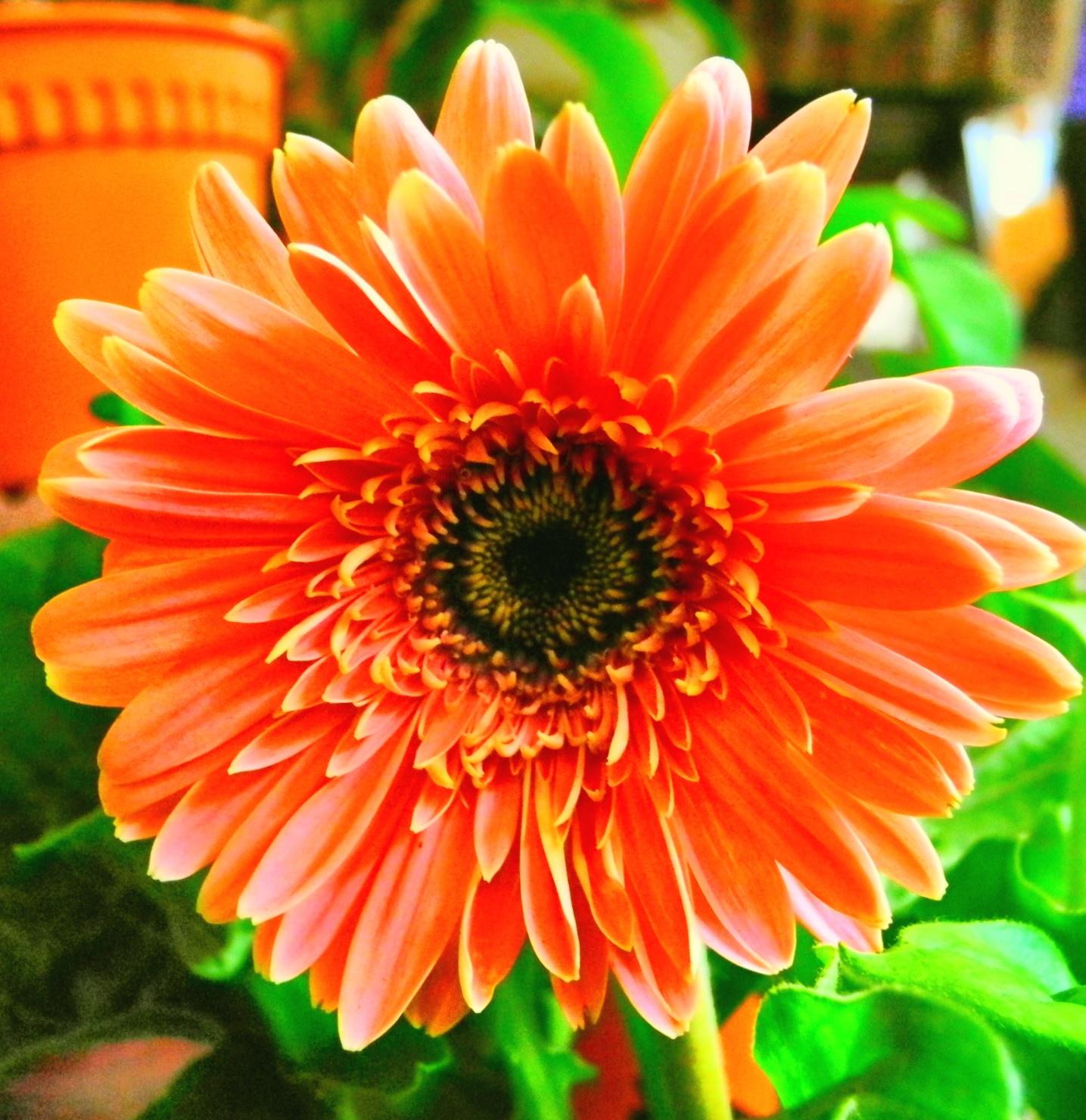 But not a grateful flowers by Sultan Firaun