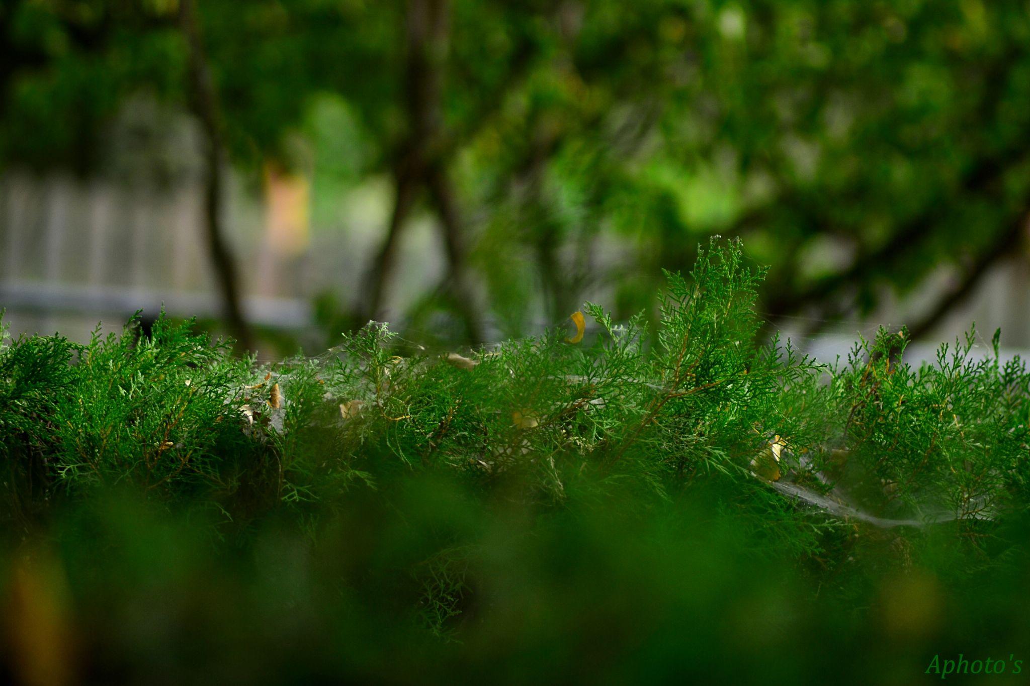 verde stratificat by Postolea Alexandru