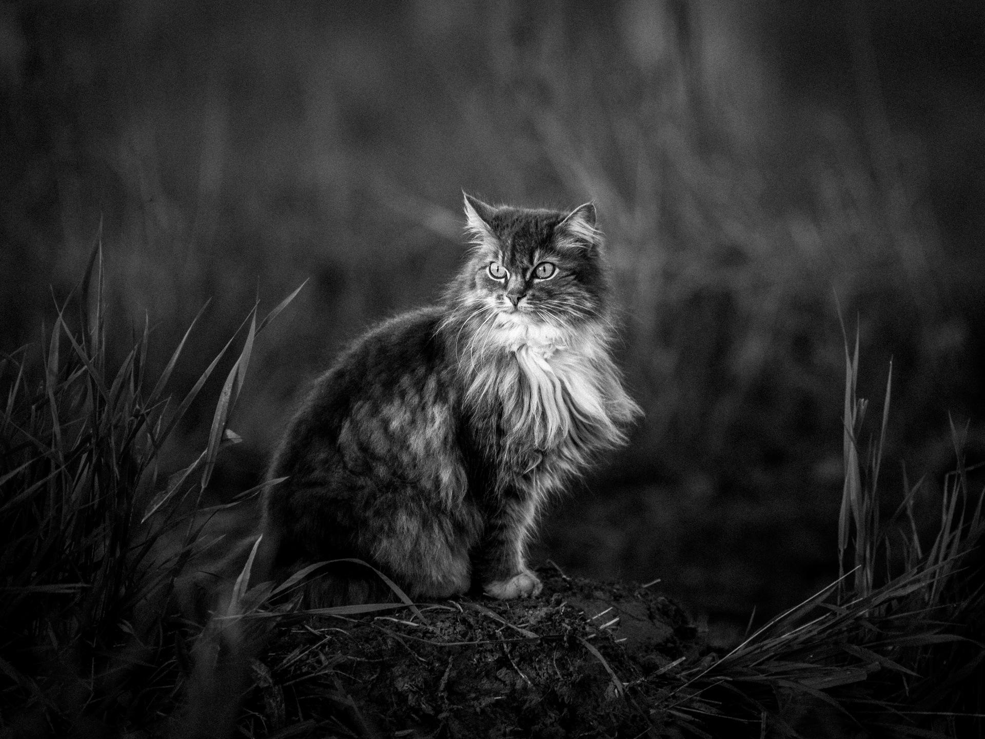 Кошка Лапка by Kirill Karpov