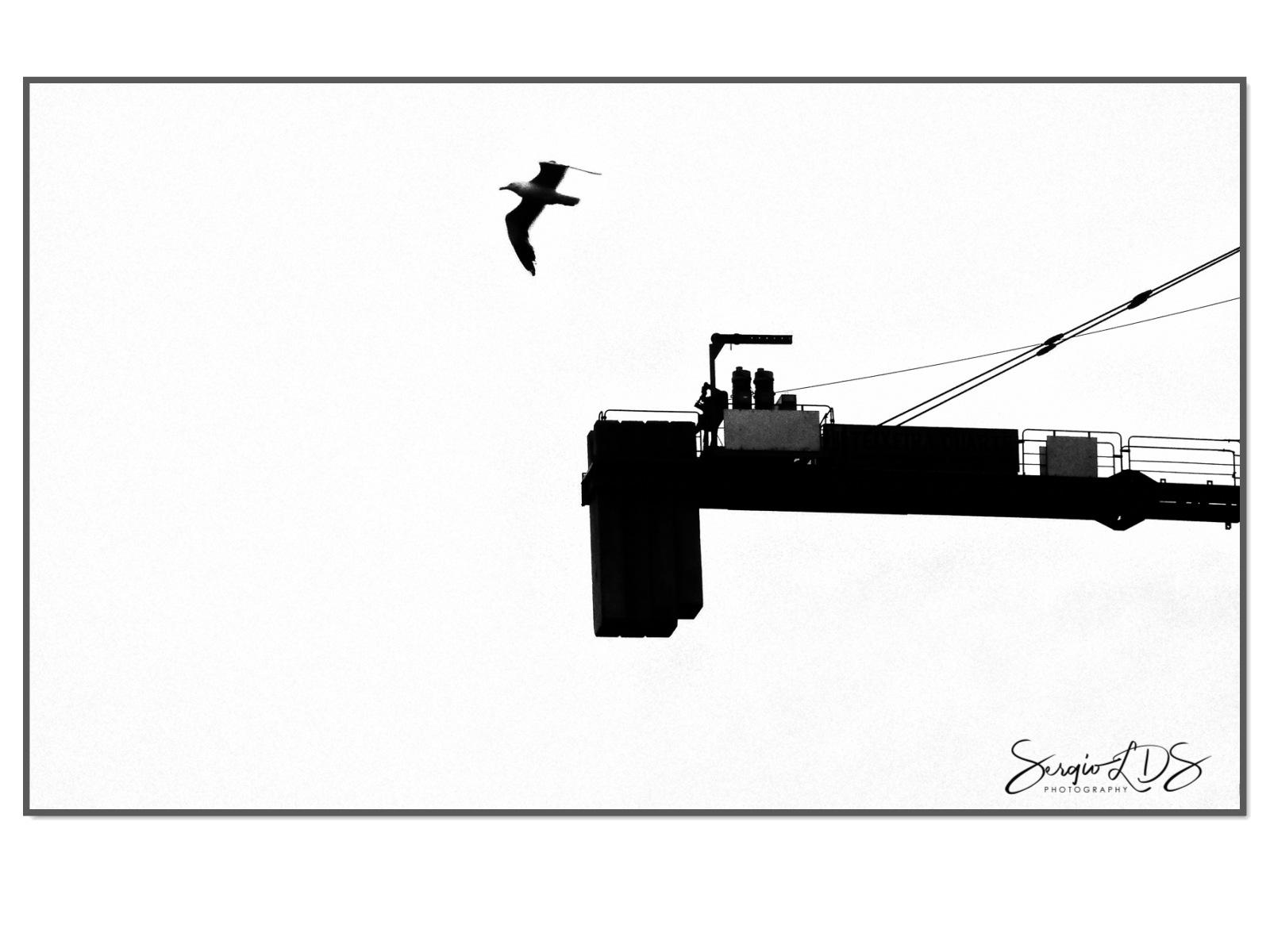 Birds & Bridges... by sergiolds
