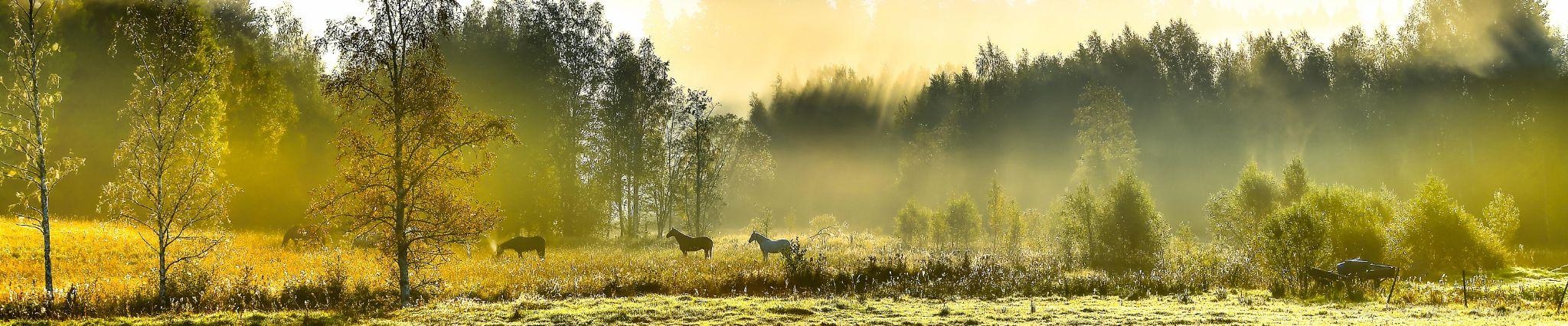 horses panorama by Håkan Lindkvist