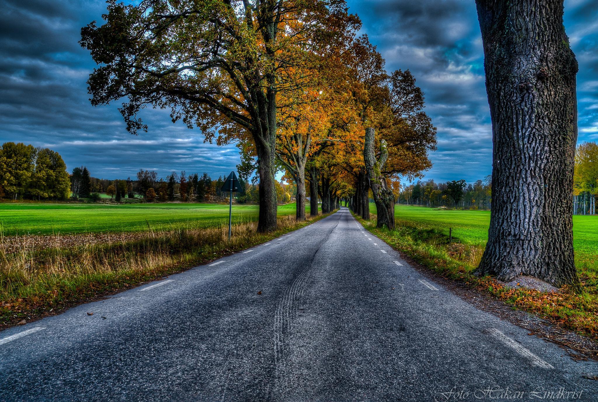 Autumn by Håkan Lindkvist
