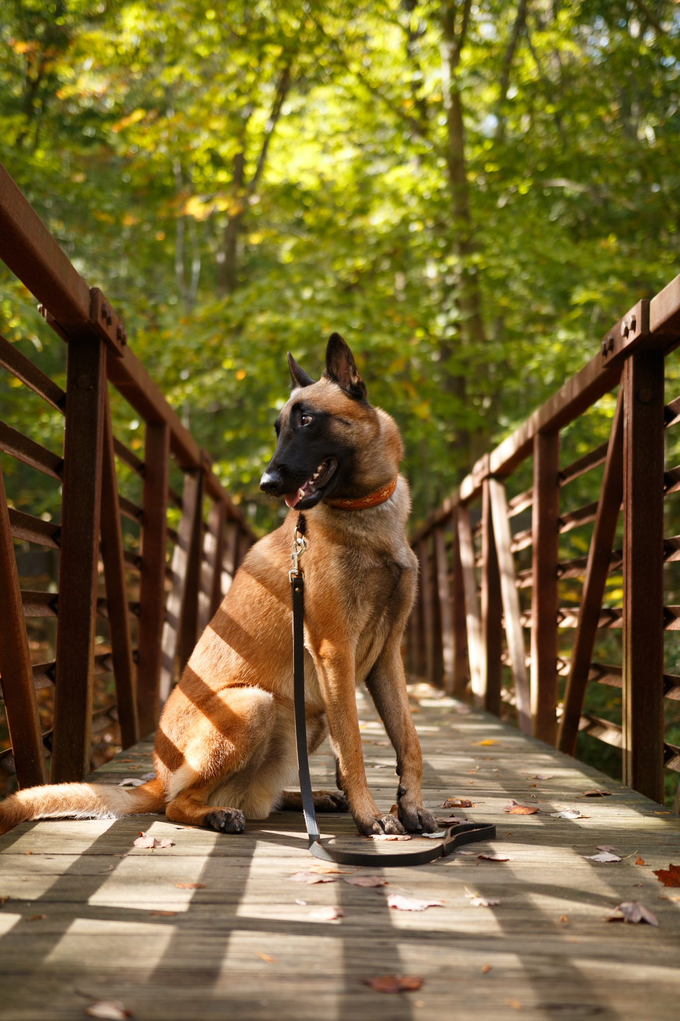Ryn At Prince William Forest Park by stregone