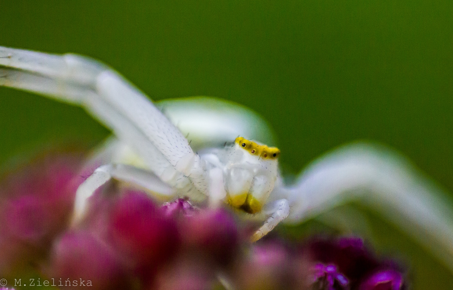 Photo in Macro #macro #spider