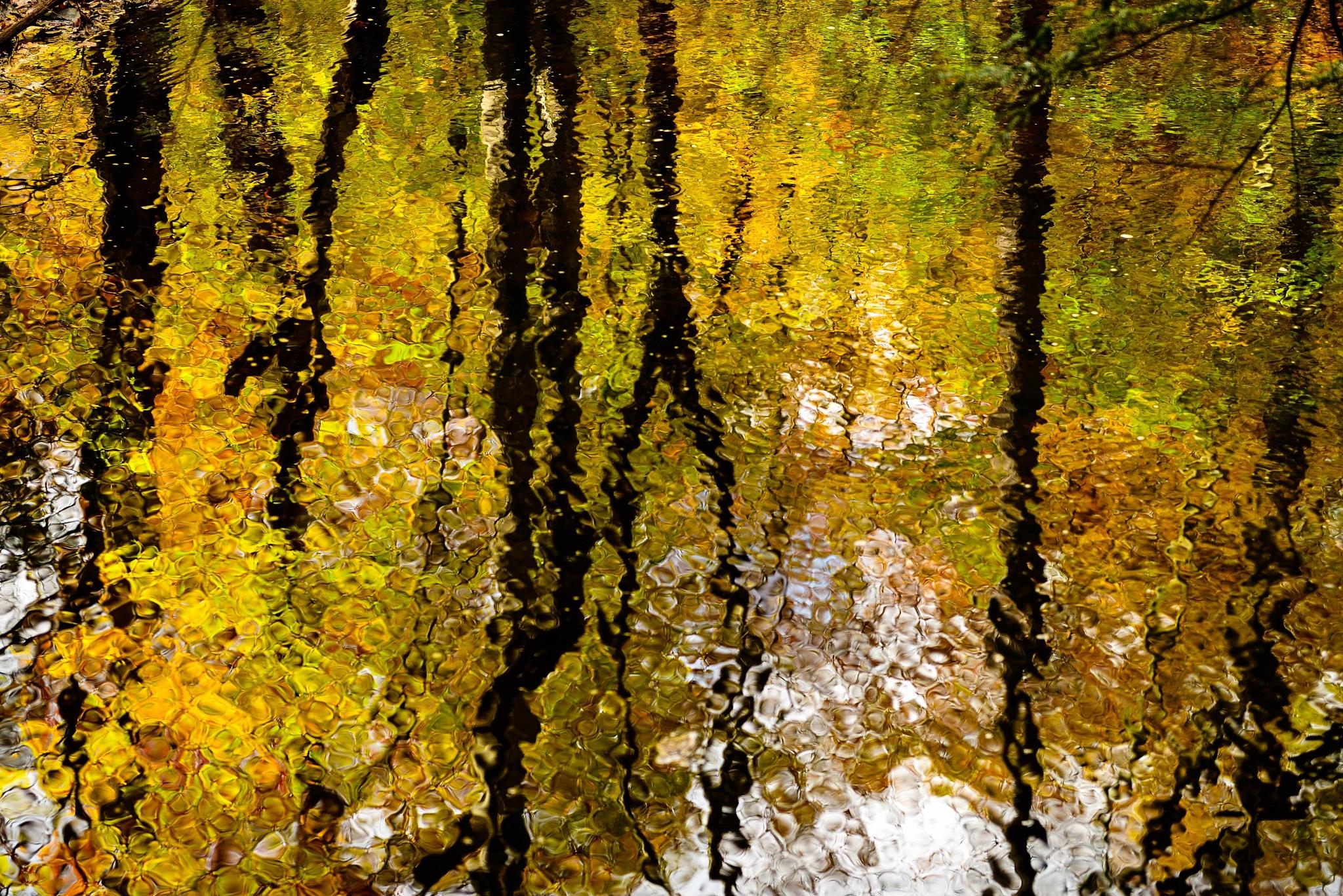 Fall reflection by  John Bewick Photography
