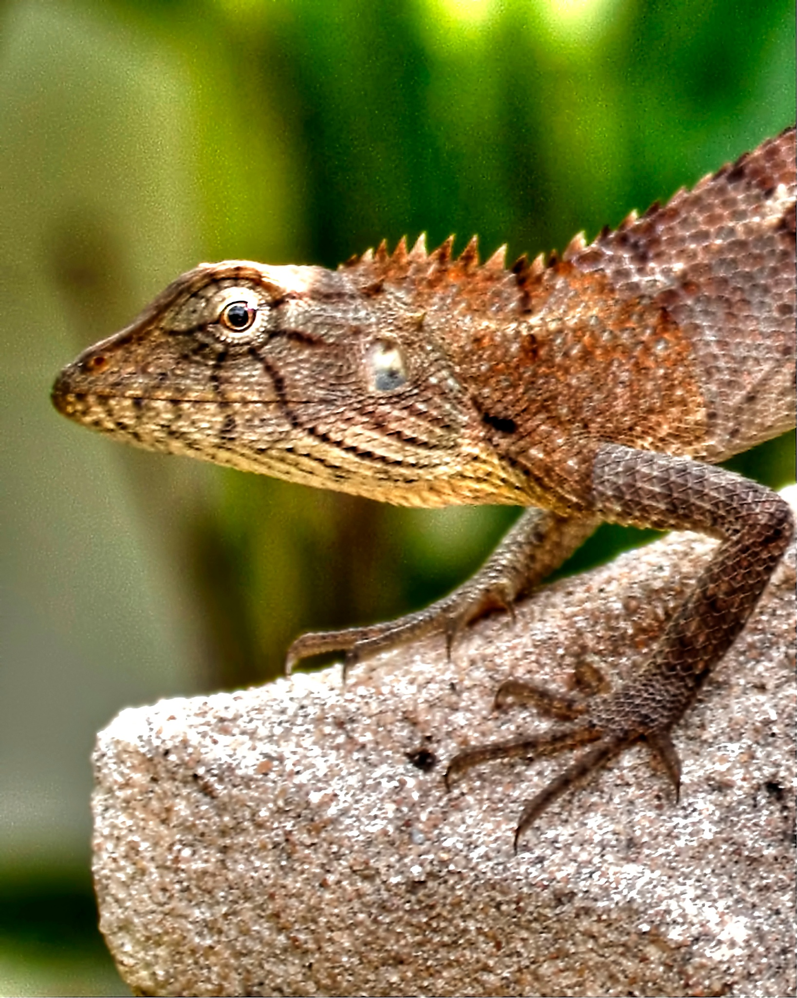 Lizard by WilliamReid