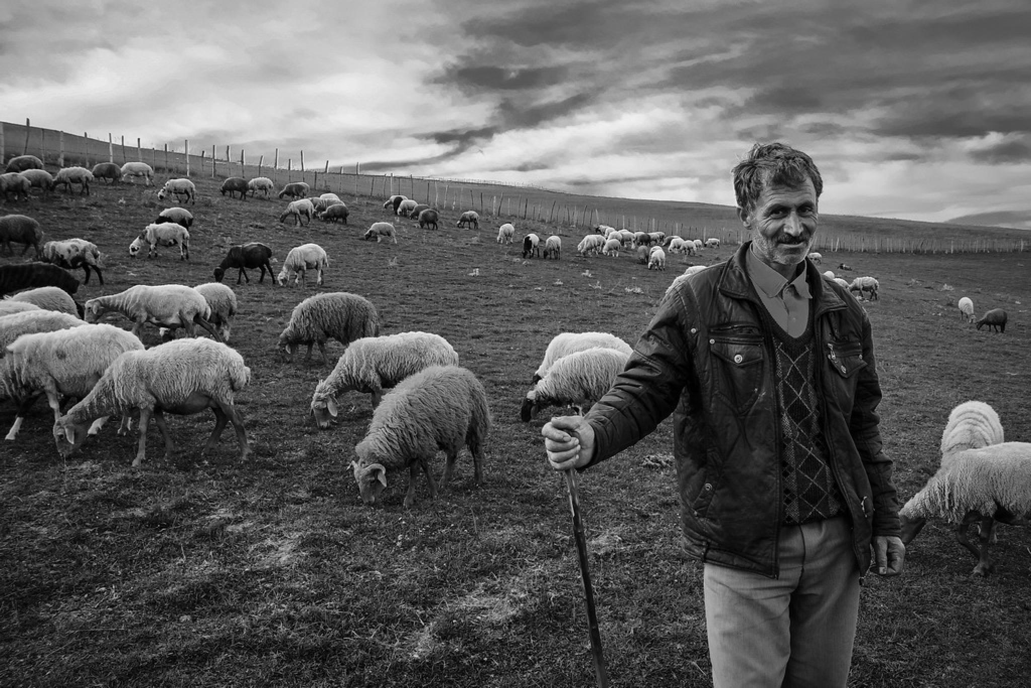 shepherd by Mostafa Mirtaleb