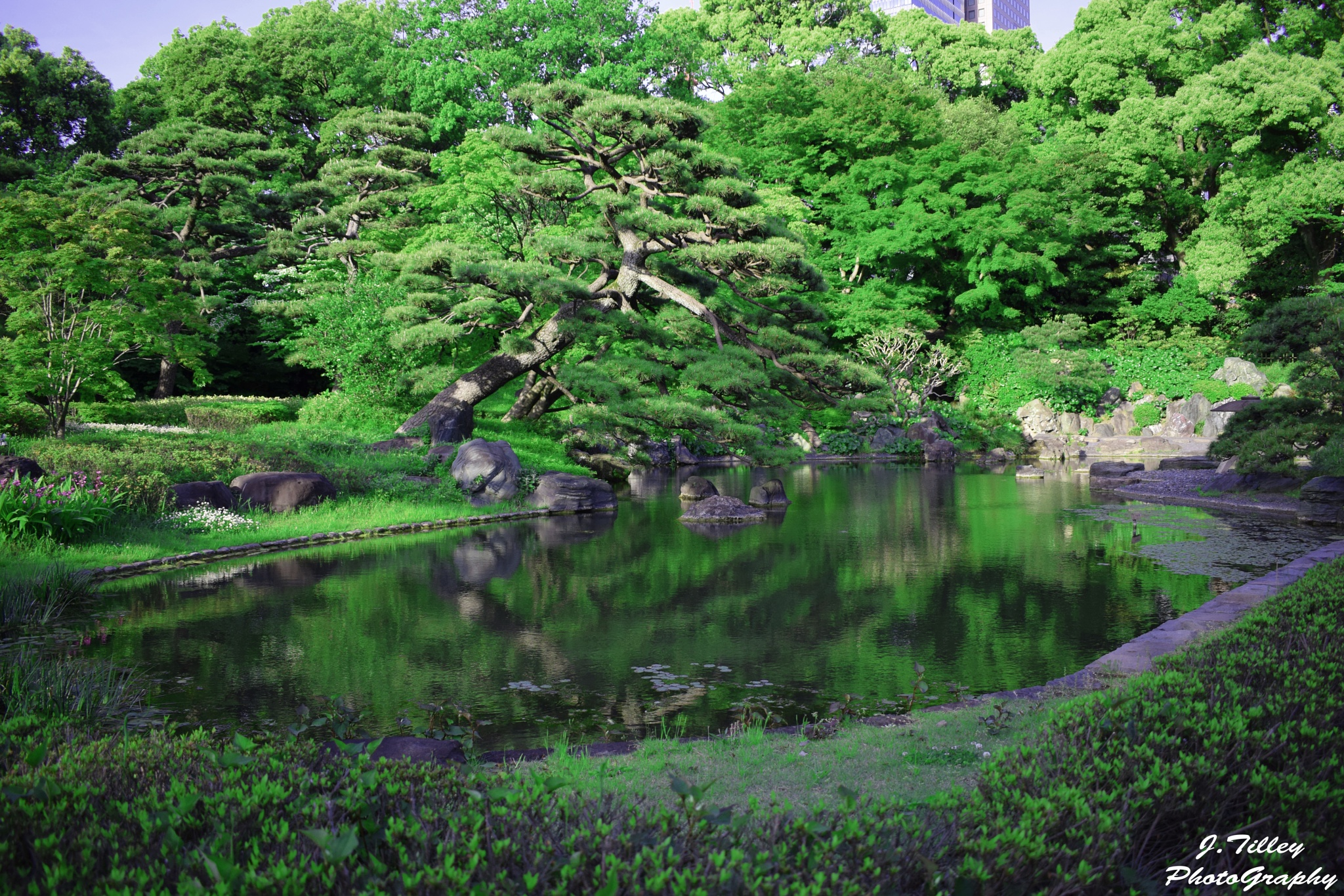 Imperial Palace Garden by Jack Tilley