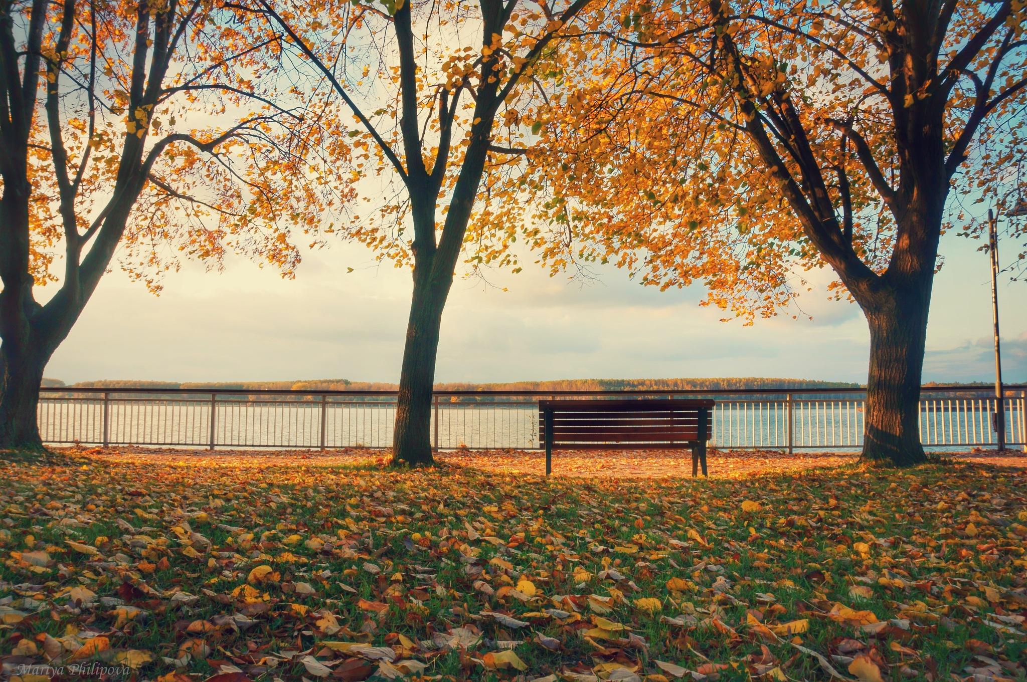 When autumn leaves start to fall by MariyaPhilipova