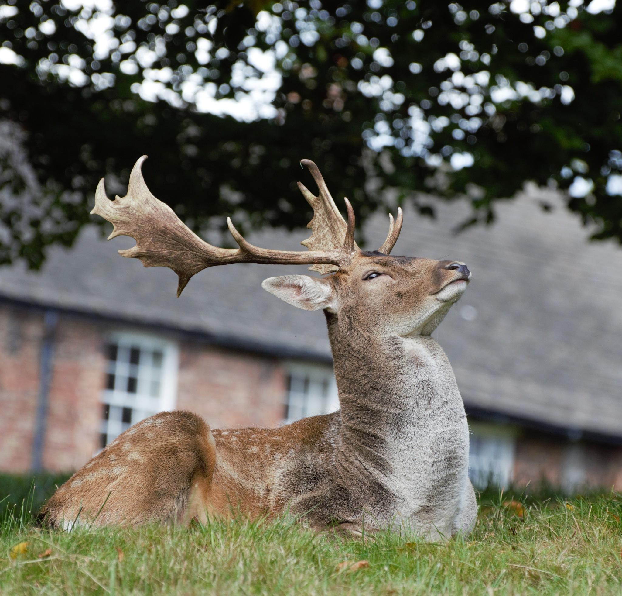 Deer by Jack Moore