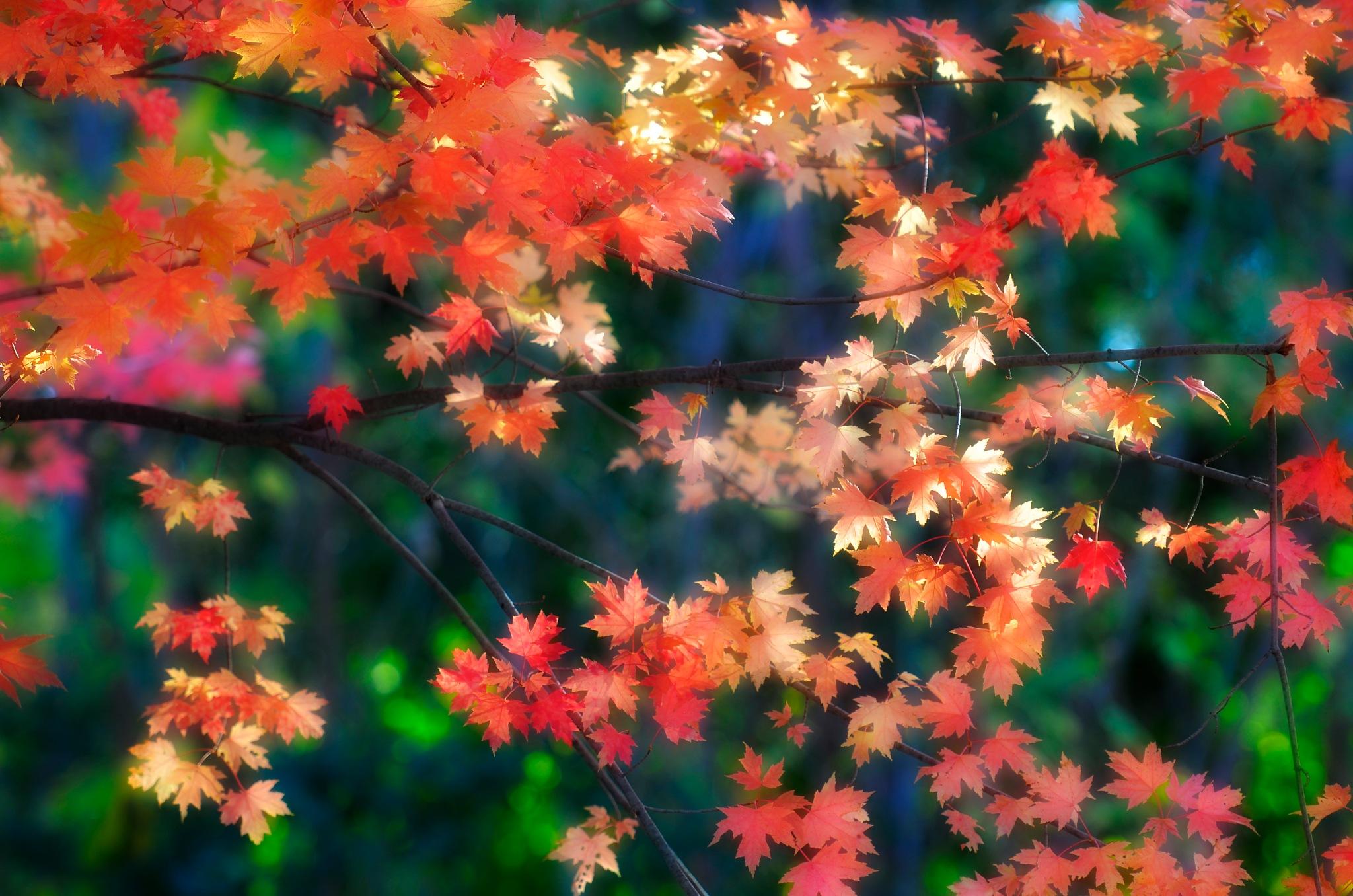 Beautiful fall colors by Leo Wong