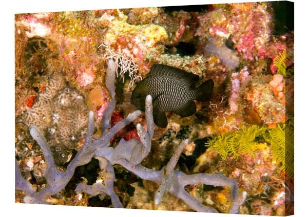 Photo in Underwater #damselfish #underwater photography #underwater #fish pictures
