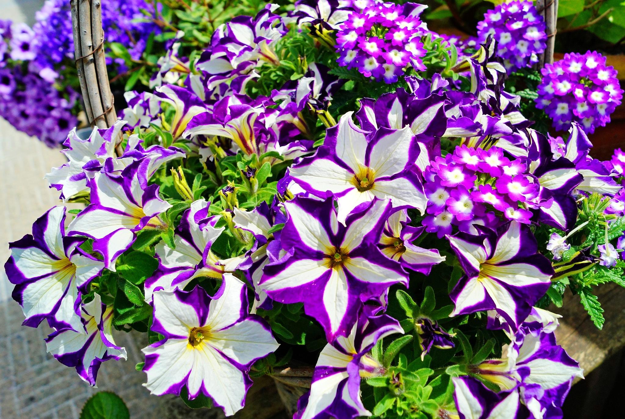 Basket of Summer Flowers by Marian Baay
